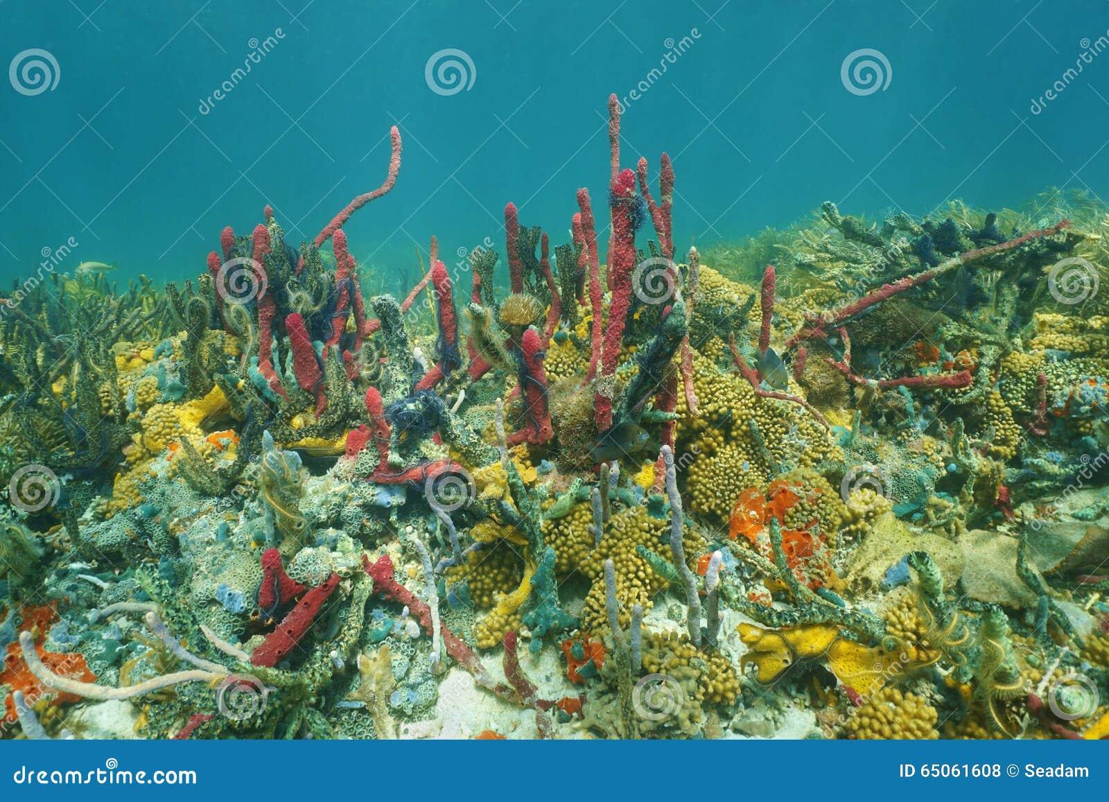 Underwater Sea-life Stock Images - Image: 30137924 |Ocean Life Plant Caribbean