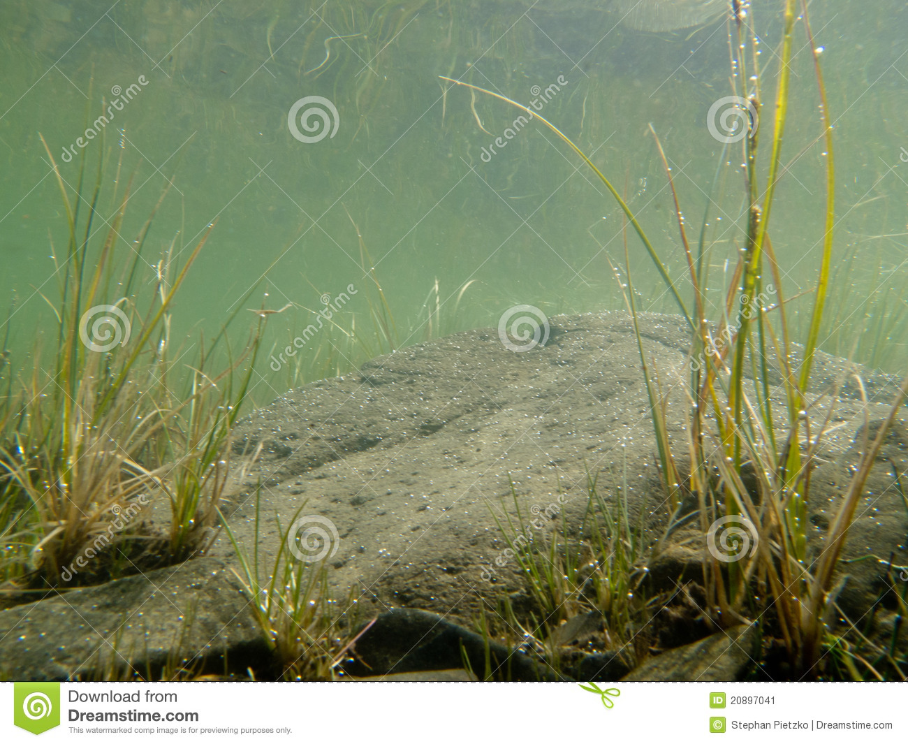Underwater Shot Of Submerged Grass And Plants Stock Image
