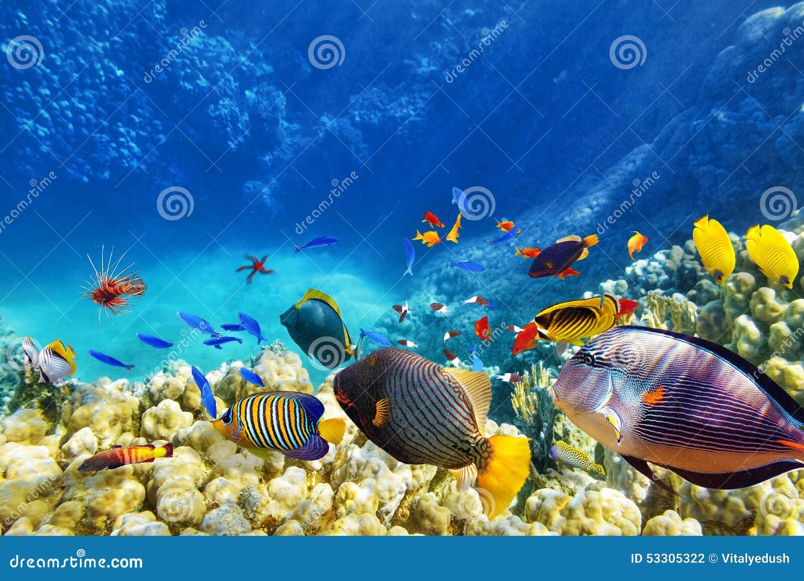 Underwater Tropical Fish Underwater World With ...