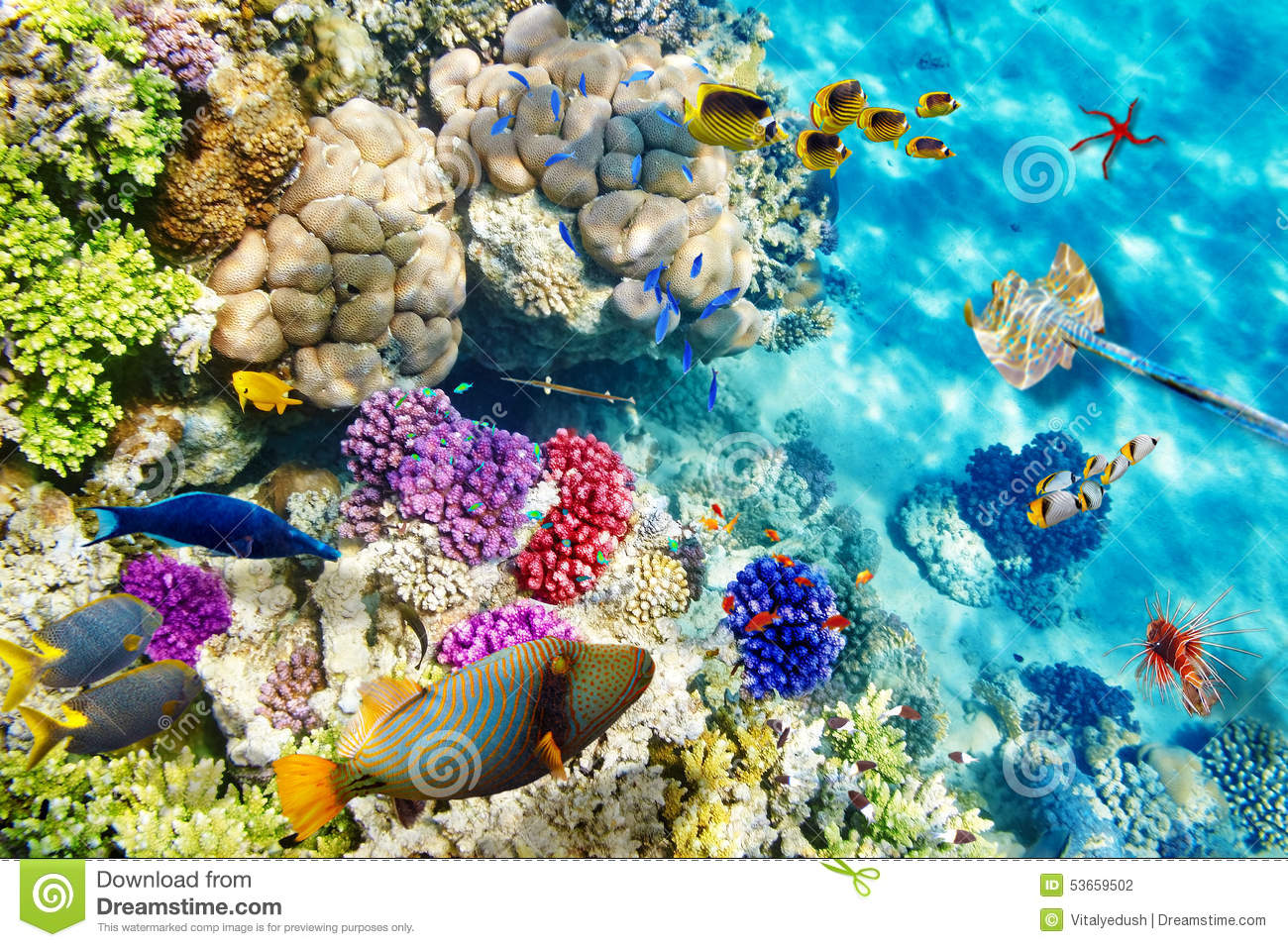 Underwater World With Corals And Tropical Fish Stock Photo 53659502