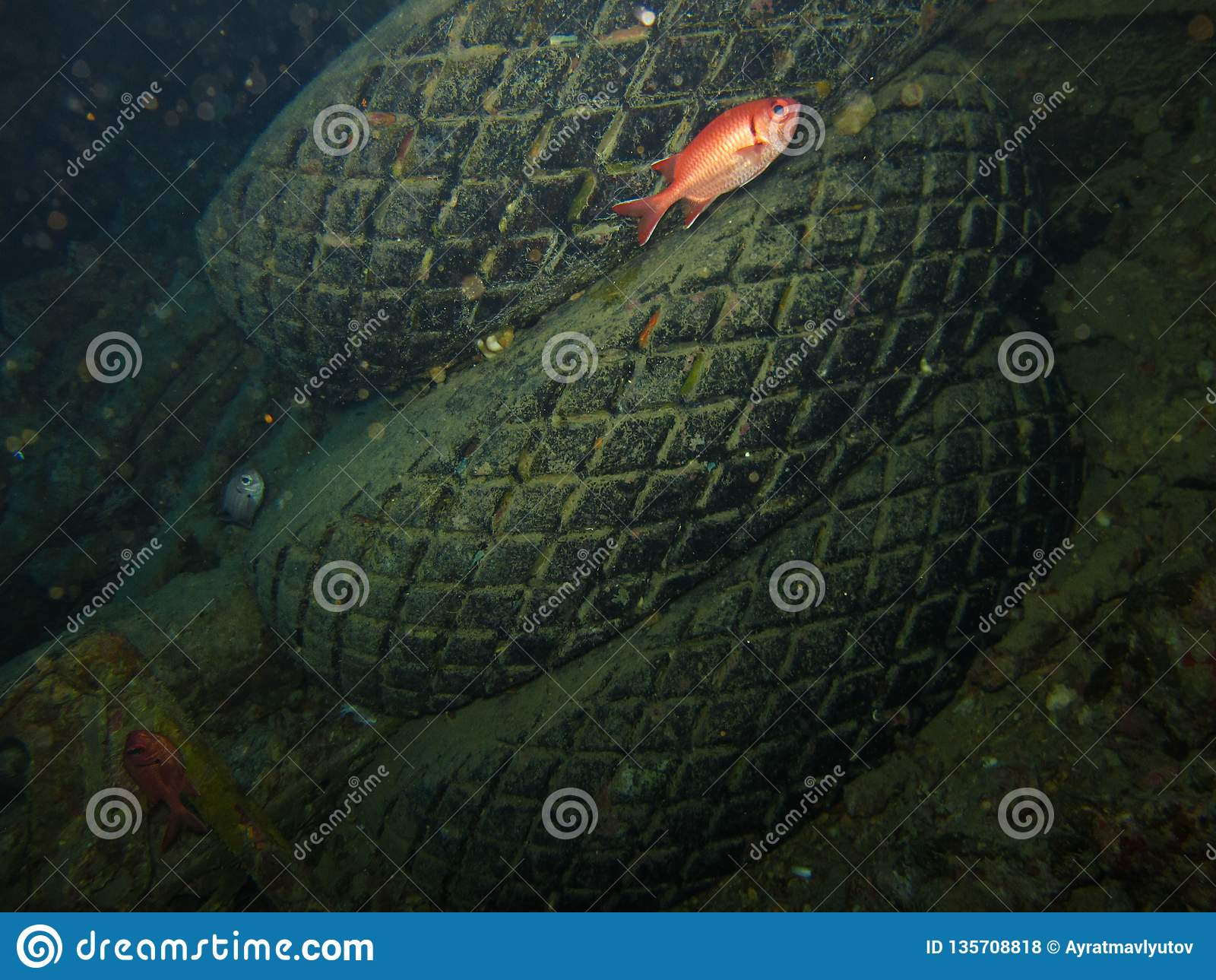 Underwater world in deep water in coral reef and plants flowers flora in blue world marine wildlife, Fish, corals and sea creature