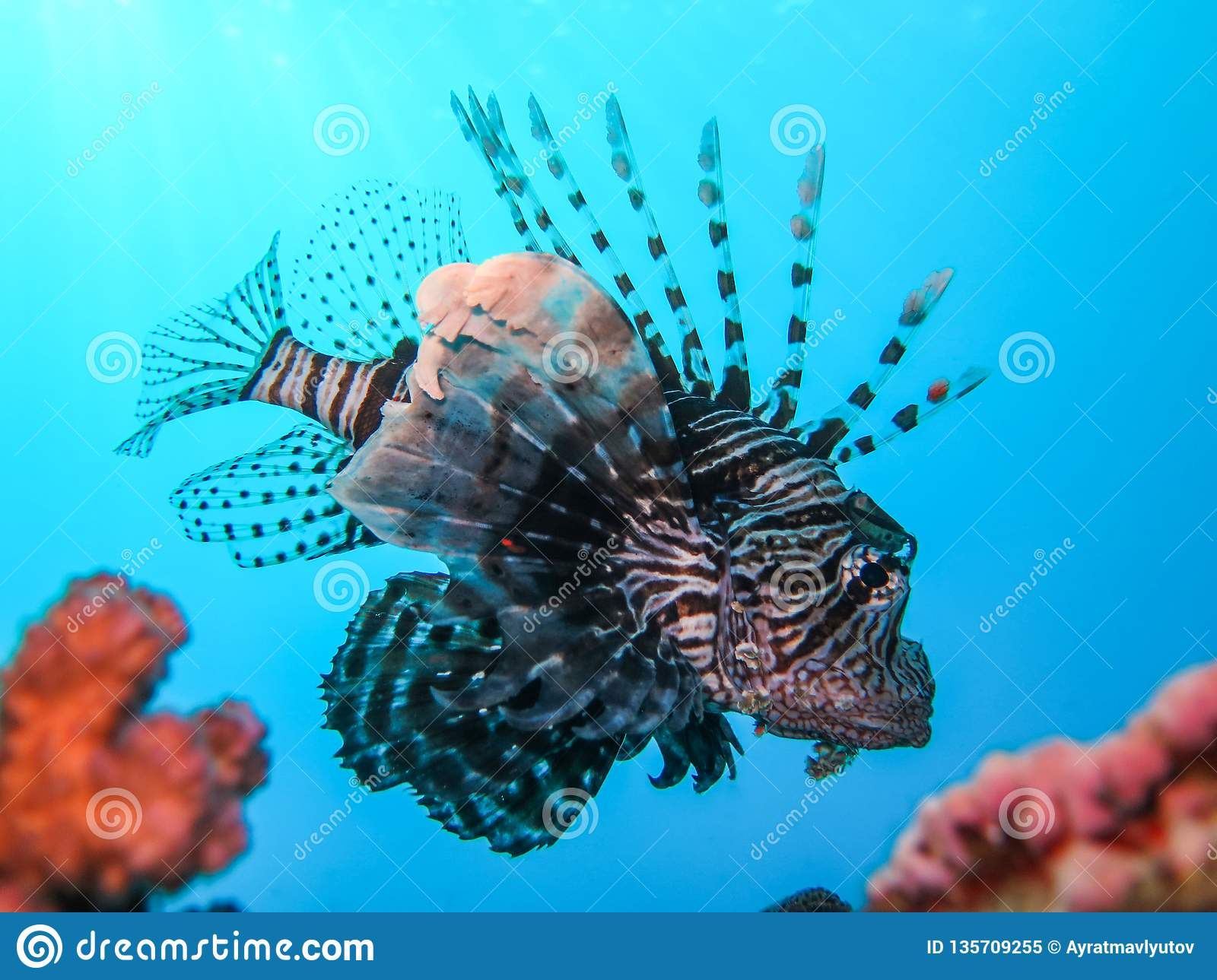 Underwater World In Deep Water In Coral Reef And Plants