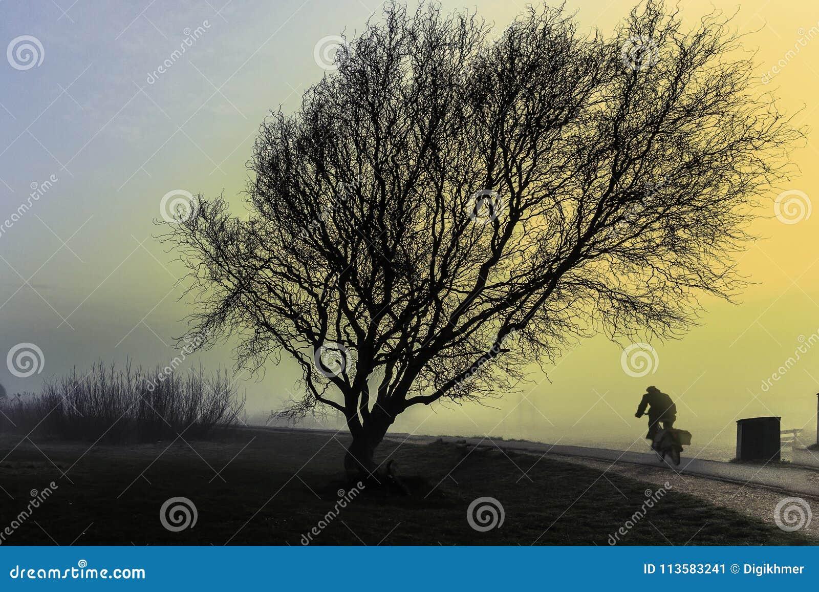 Une équitation de cycliste près d un grand arbre