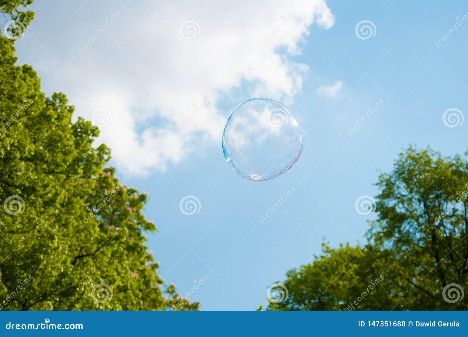 Une bulle de savon ronde sur le ciel bleu, avec des arbres ? l arri?re-plan