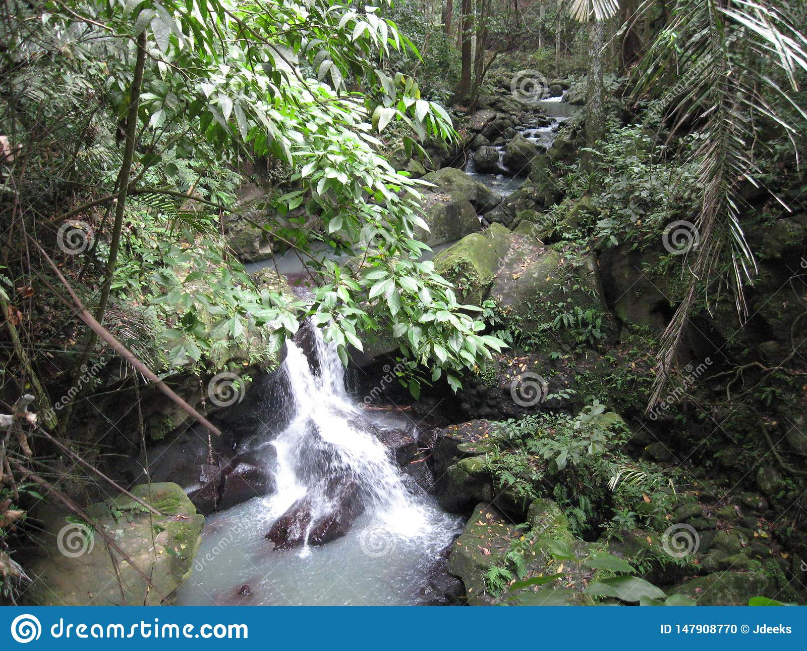 Une cascade dans la forêt aux jardins botaniques de Makiling, Philippines