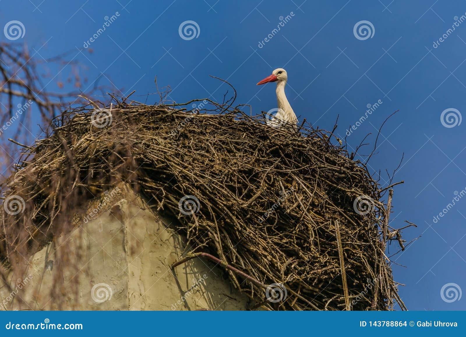Une cigogne blanche avec le bec rouge se reposant sur le nid