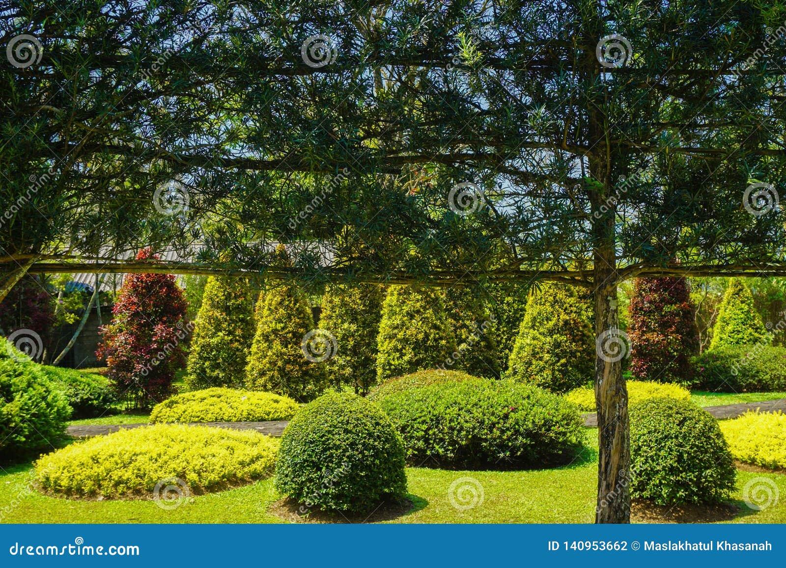 Une Décoration Verte De Mur Sur L\'arbre Avec Le Beau Jardin ...