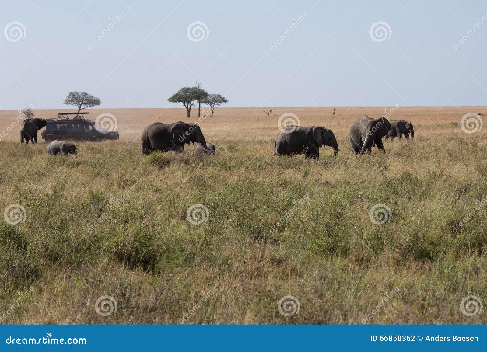 Une famille d éléphant marchant à travers la savane