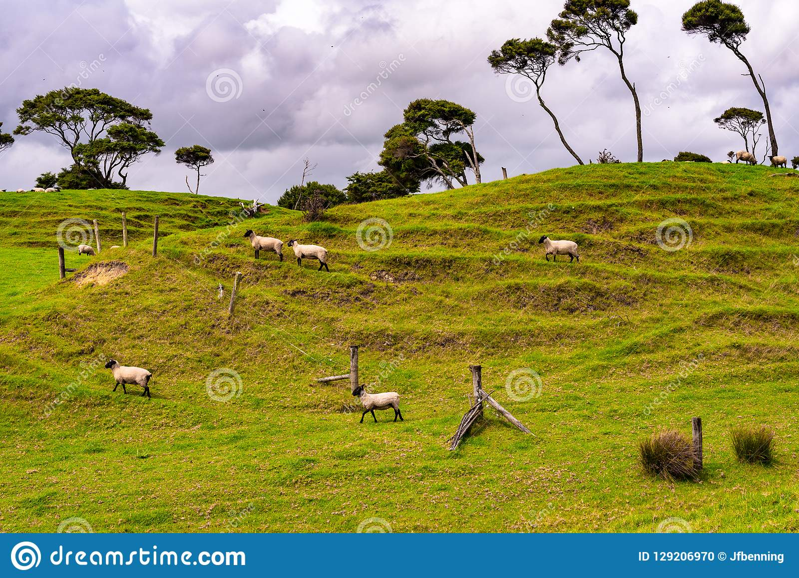 Une ferme de moutons au Nouvelle-Zélande