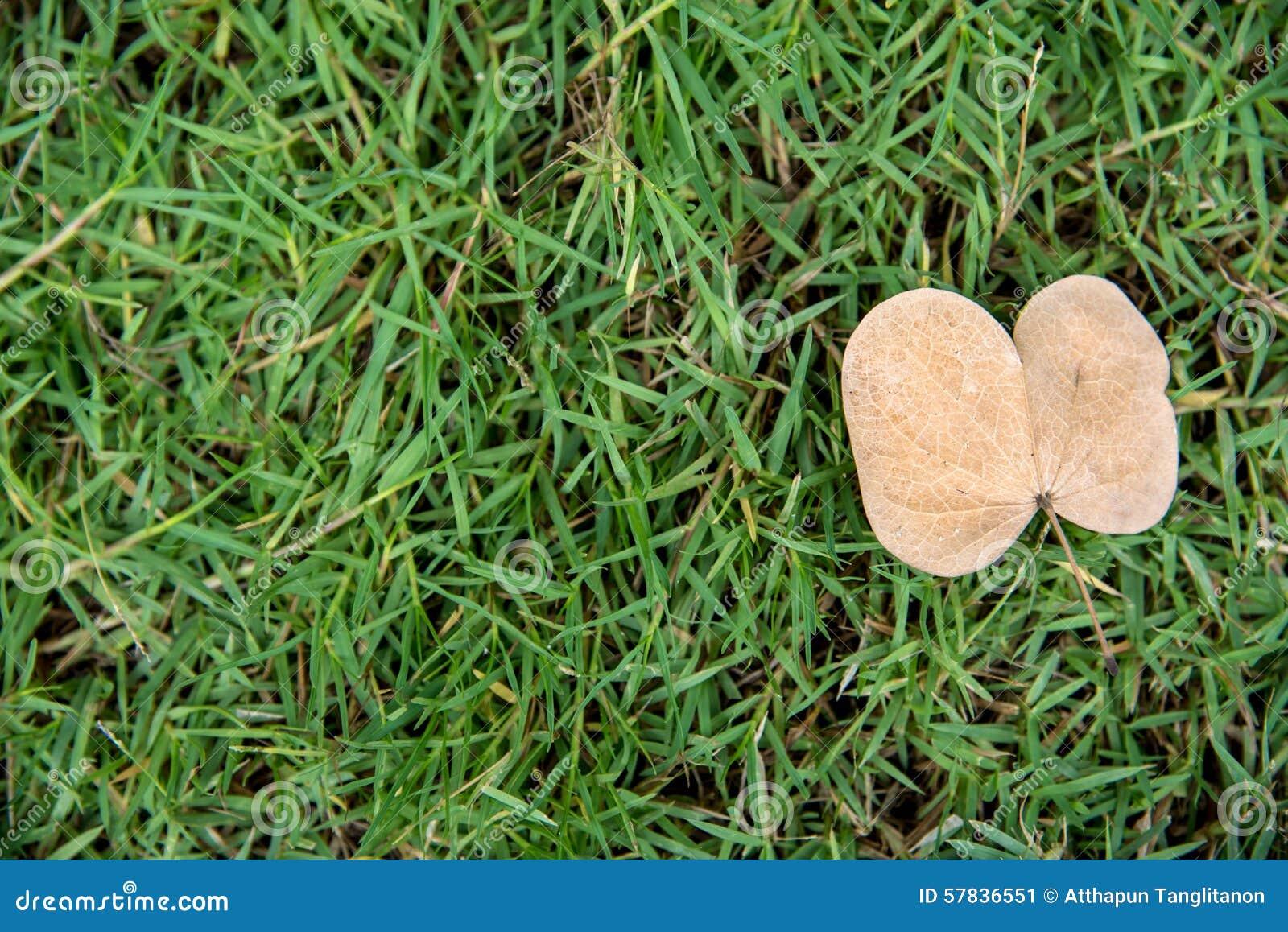 Une feuille morte simple s étendent sur l herbe verte