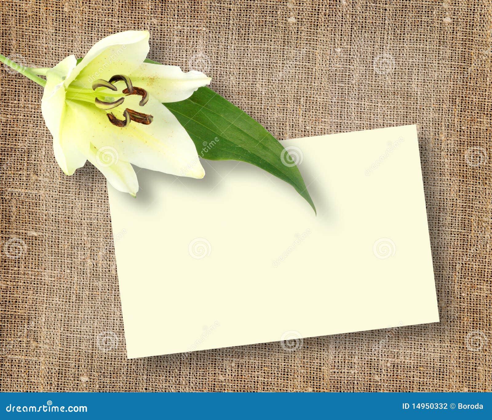 Une fleur blanche avec la message carte photographie stock for Livraison fleurs avec message