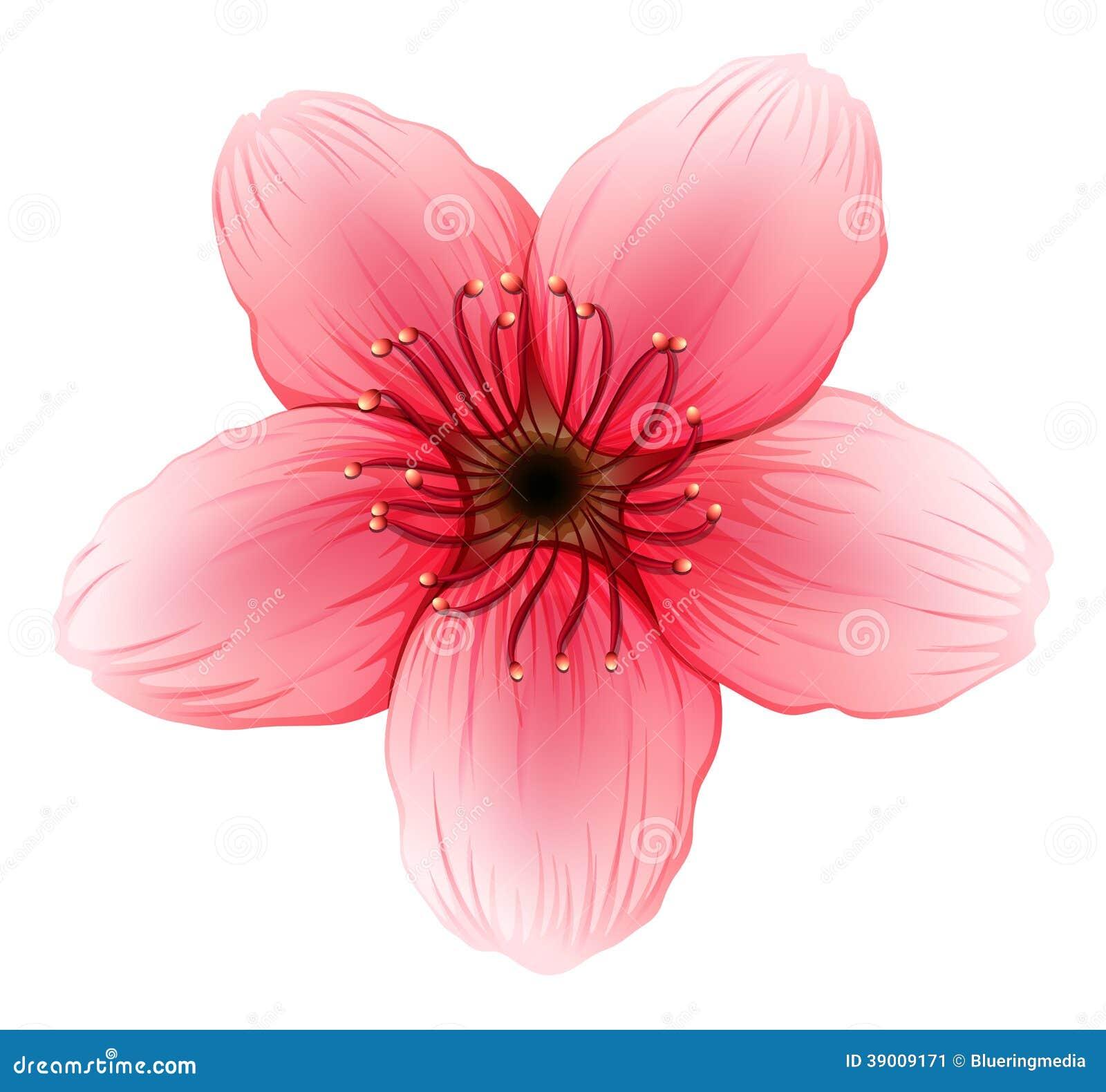 une fleur rose de cinq p tale illustration de vecteur. Black Bedroom Furniture Sets. Home Design Ideas