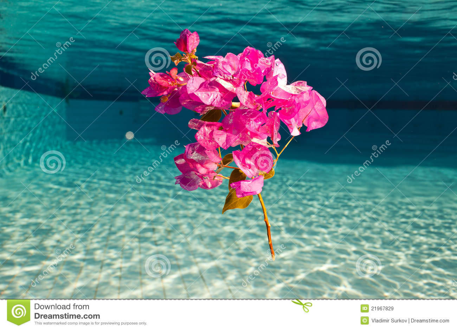 une fleur sous l 39 eau image stock image du branchement 21967829. Black Bedroom Furniture Sets. Home Design Ideas