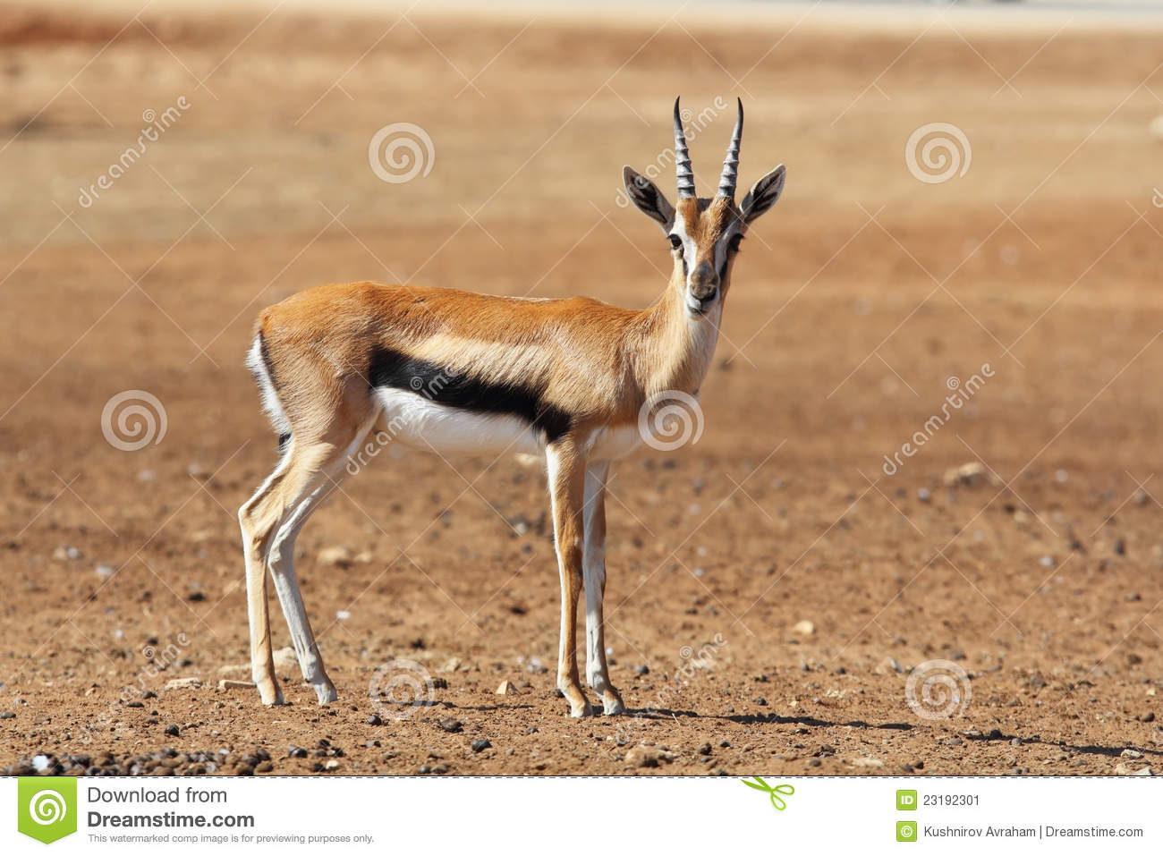 one page business plan gazelles animal
