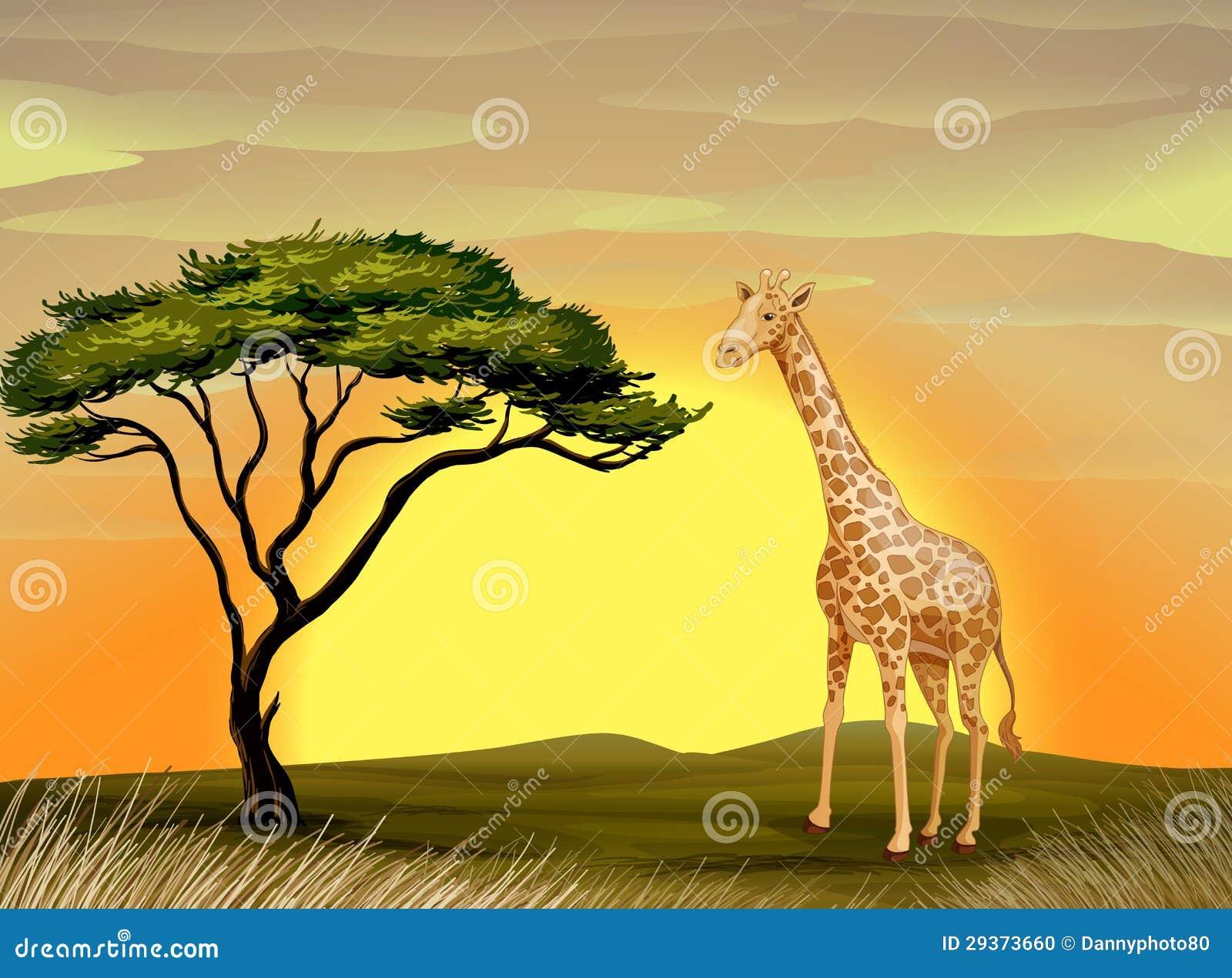 Une girafe sous l 39 arbre illustration stock illustration du aride 29373660 - Arbre africain en 7 lettres ...