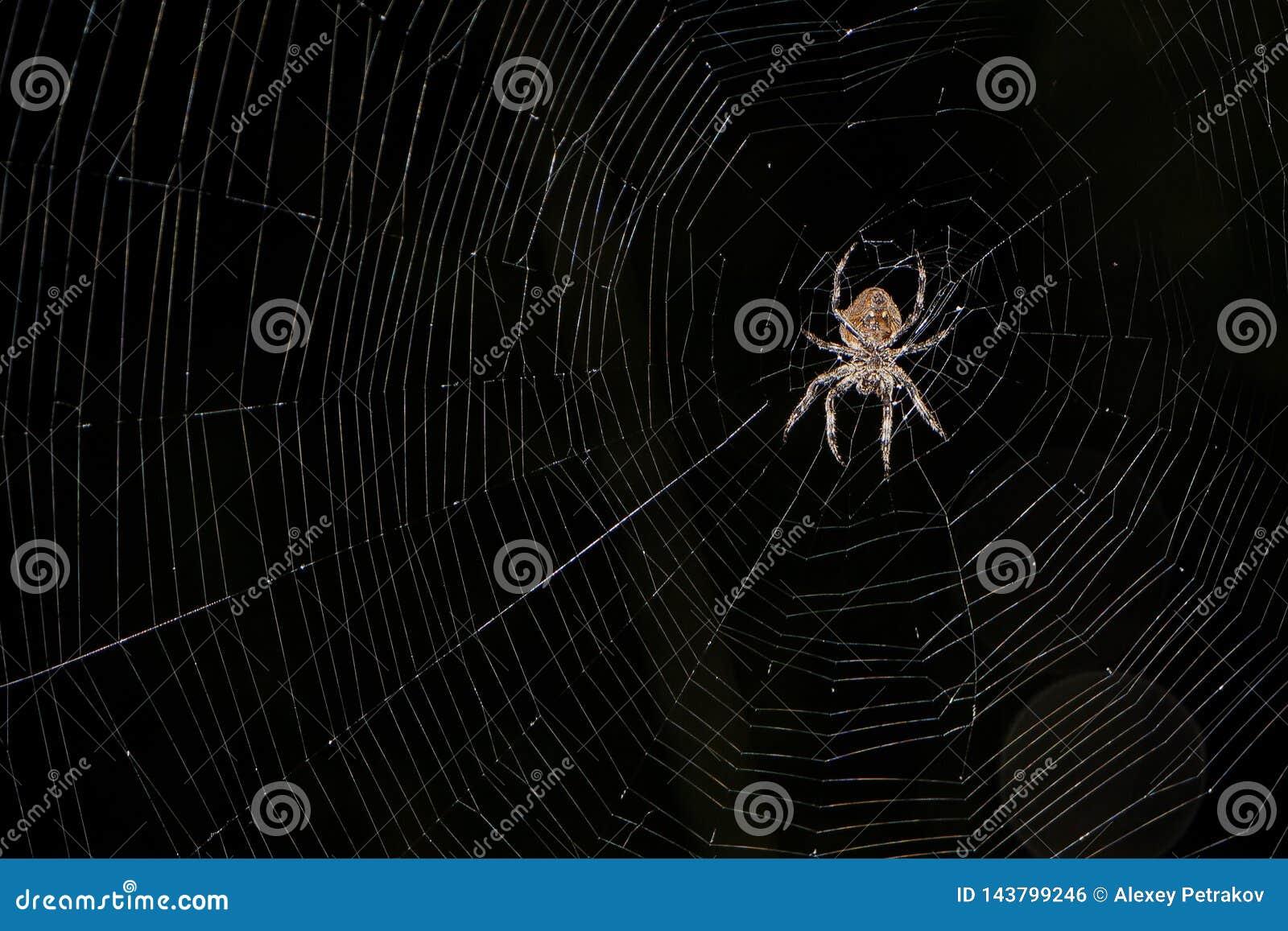 Une grande araignée se repose sur sa toile d araignée