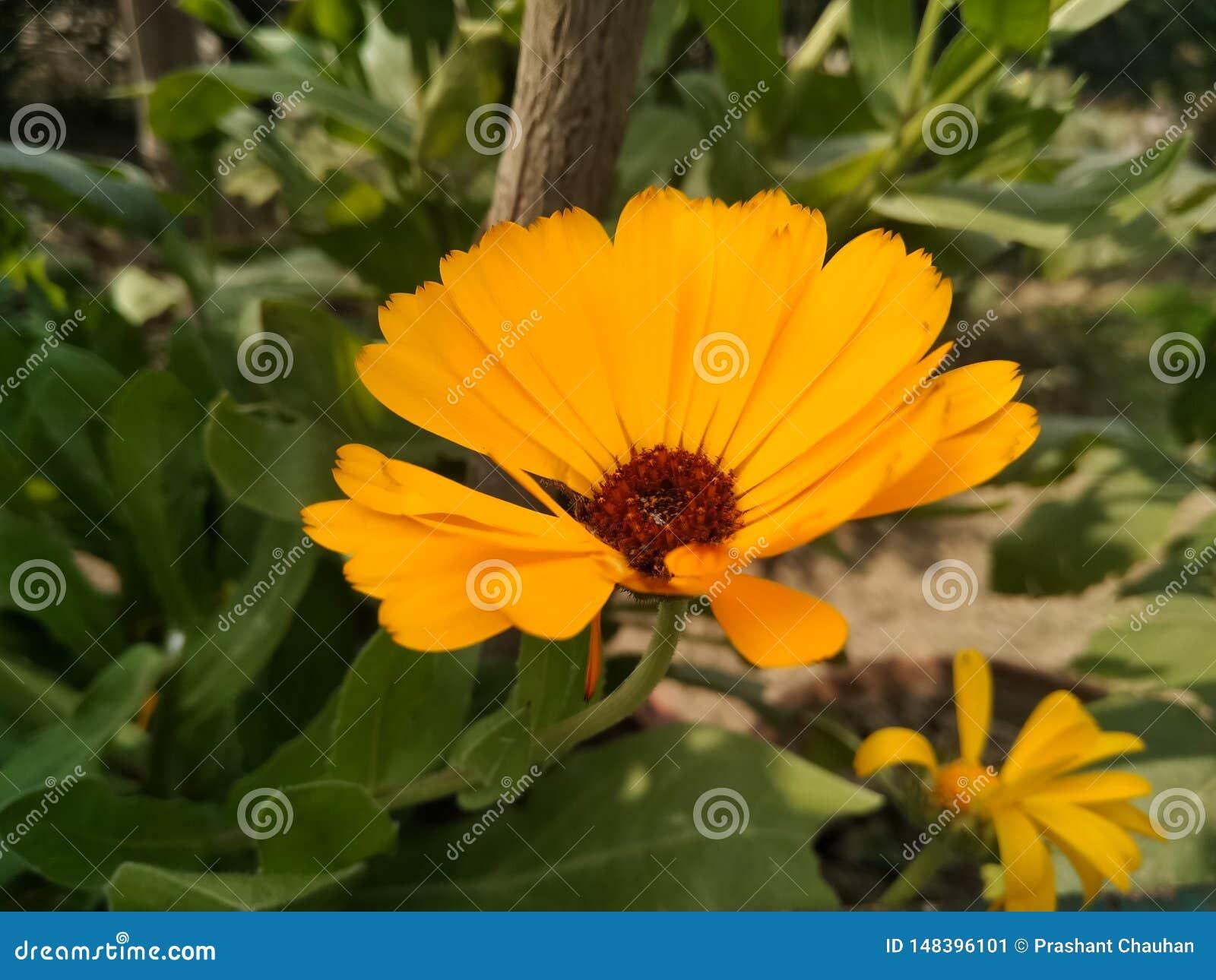 Une image de fleur de yallow