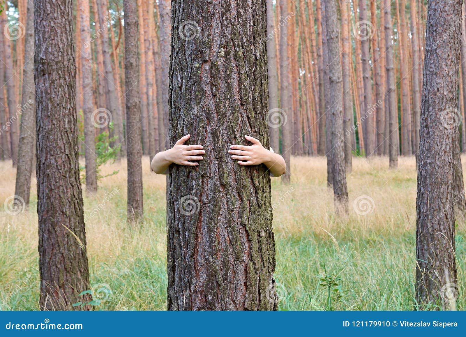Une jeune femme étreignant un tronc d arbre dans une forêt dans le jour d été