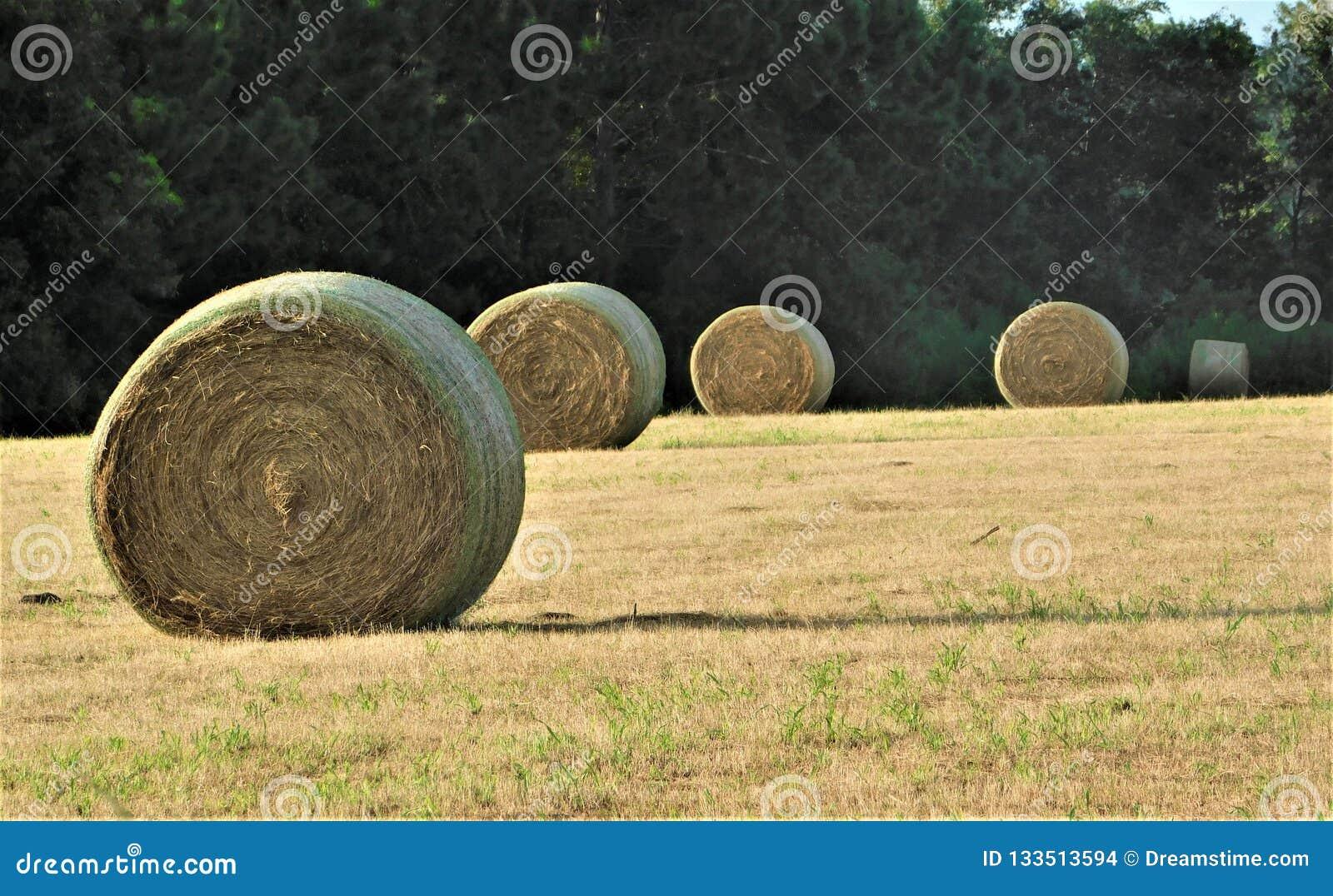 Une ligne de Hay Bales rond dans le domaine avec le contexte des arbres