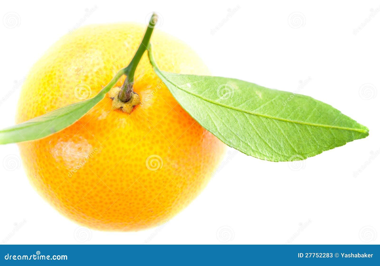 Une mandarine avec les lames vertes