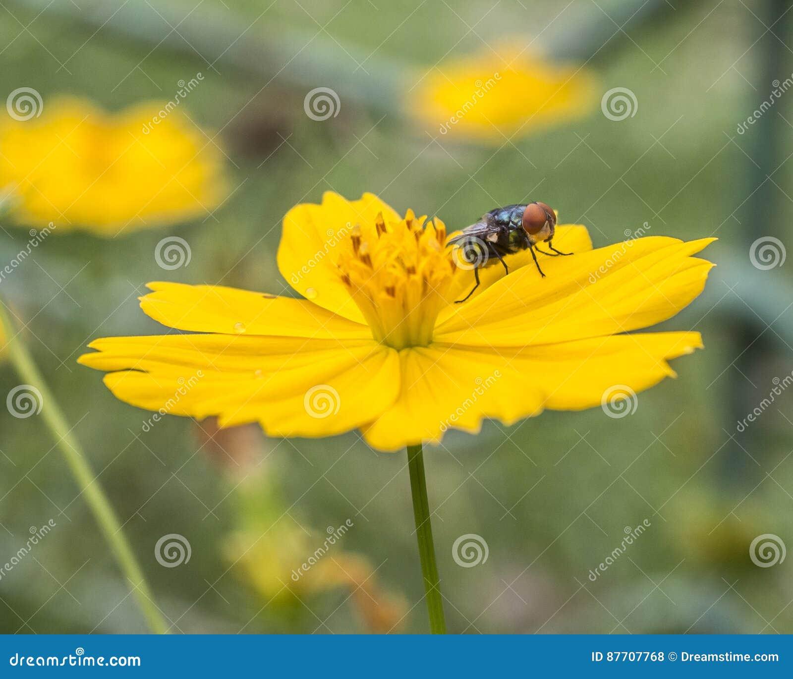 Une mouche sur une petite fleur jaune en beau parc de miniature de l Indonésie