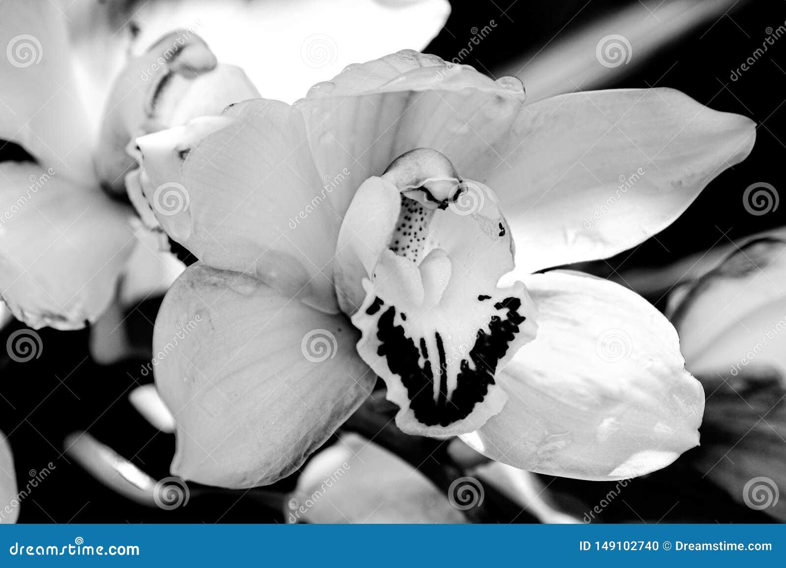 Une orchid?e d isolement dans le jardin