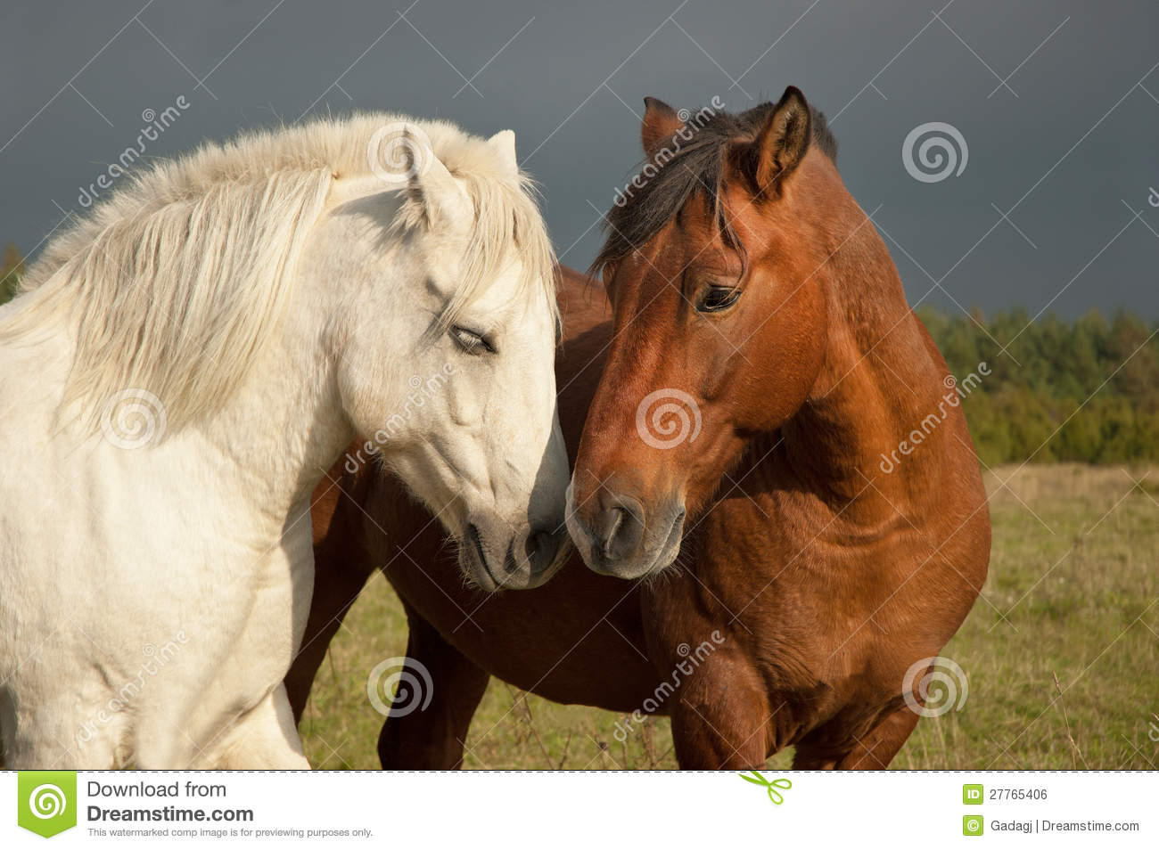 Une paire de chevaux affichant l affection