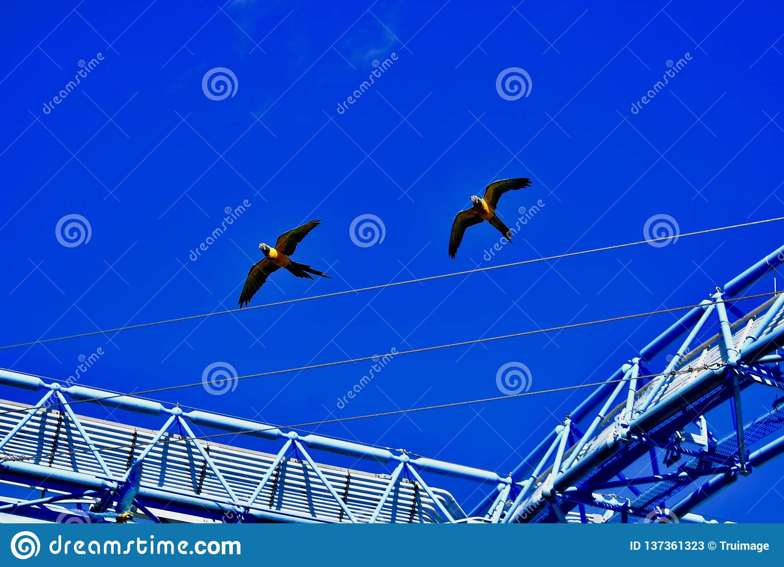 Une paire de perroquets colorés en vol
