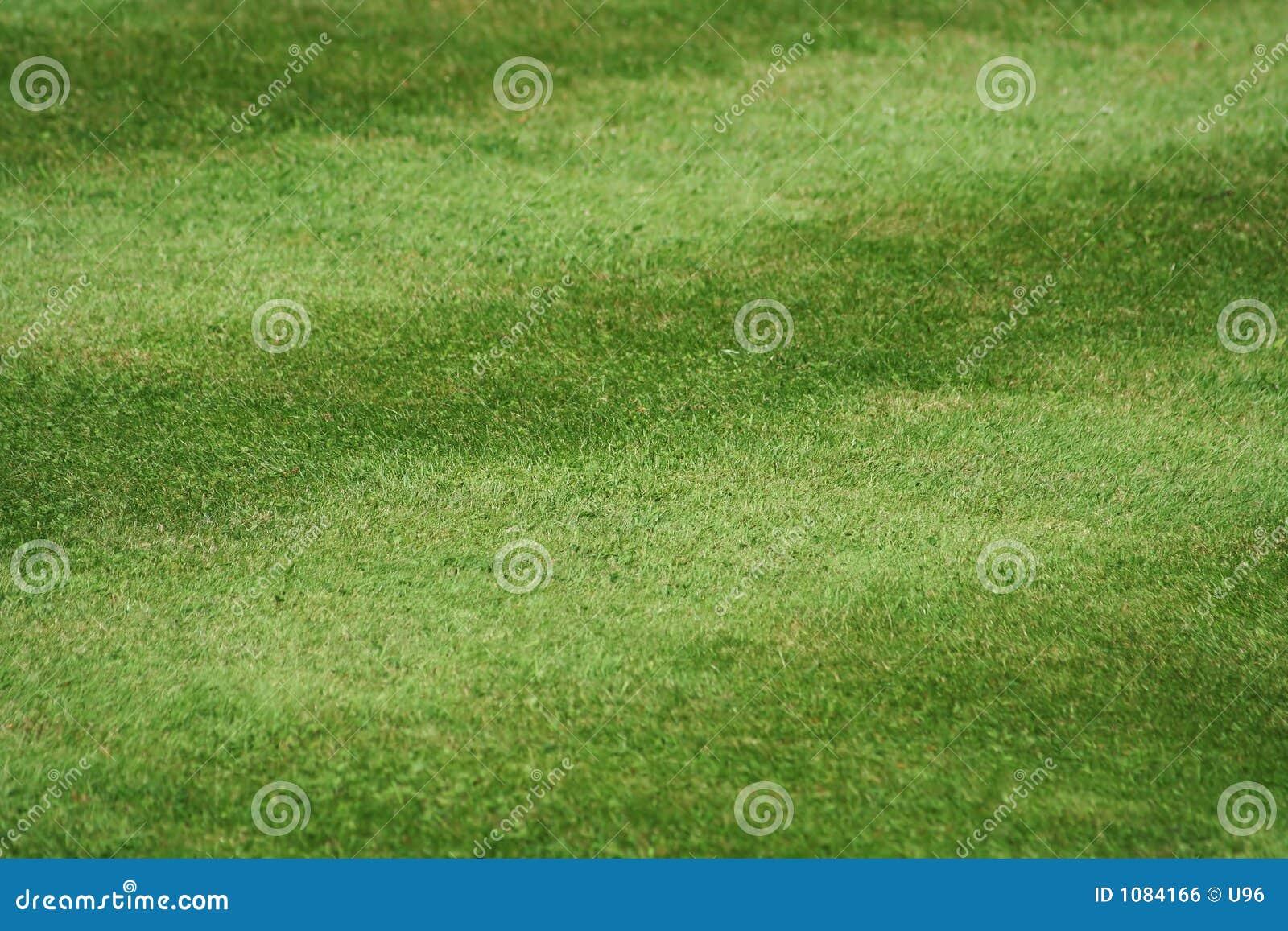 Une pelouse de l herbe soigné fauchée, 45deg à la piste, 5 pistes