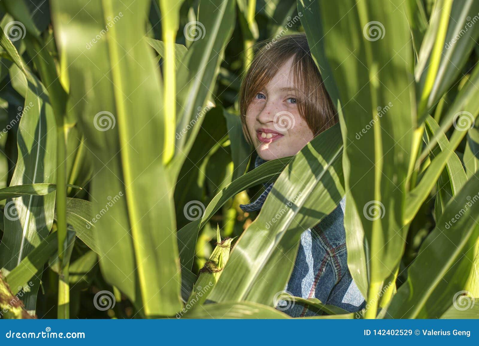 Une petite fille se cache dans le domaine de maïs