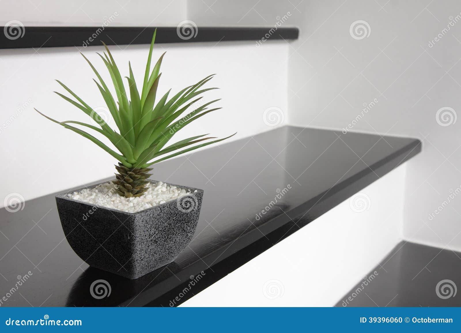 une petite plante verte pour la d coration la maison photo stock image 39396060. Black Bedroom Furniture Sets. Home Design Ideas