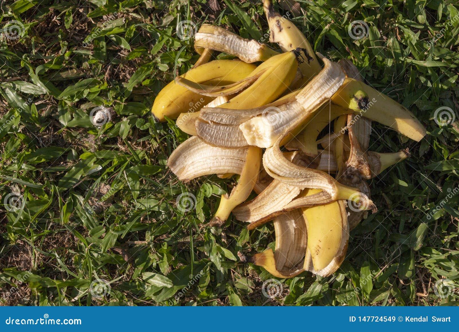 Une pile des bananes
