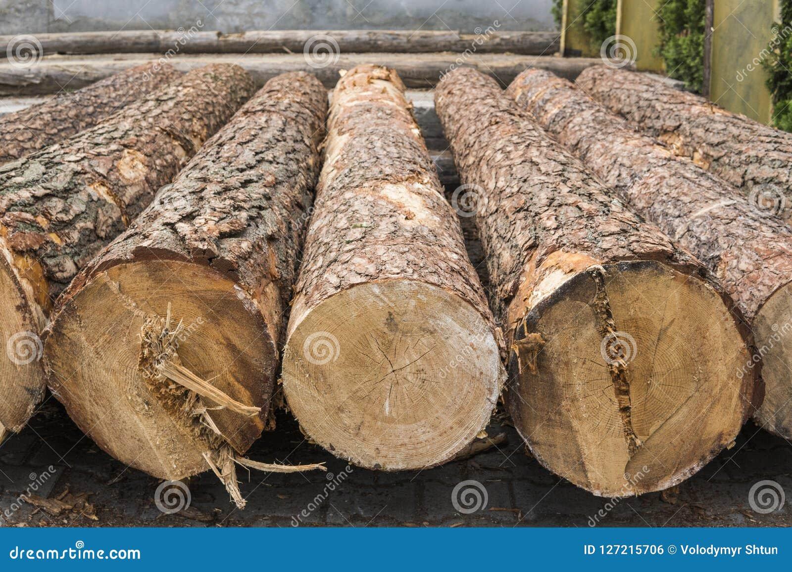 Une pile des rondins se trouvent sur une plate-forme de forêt, une scierie Traitement du bois de construction à la scierie