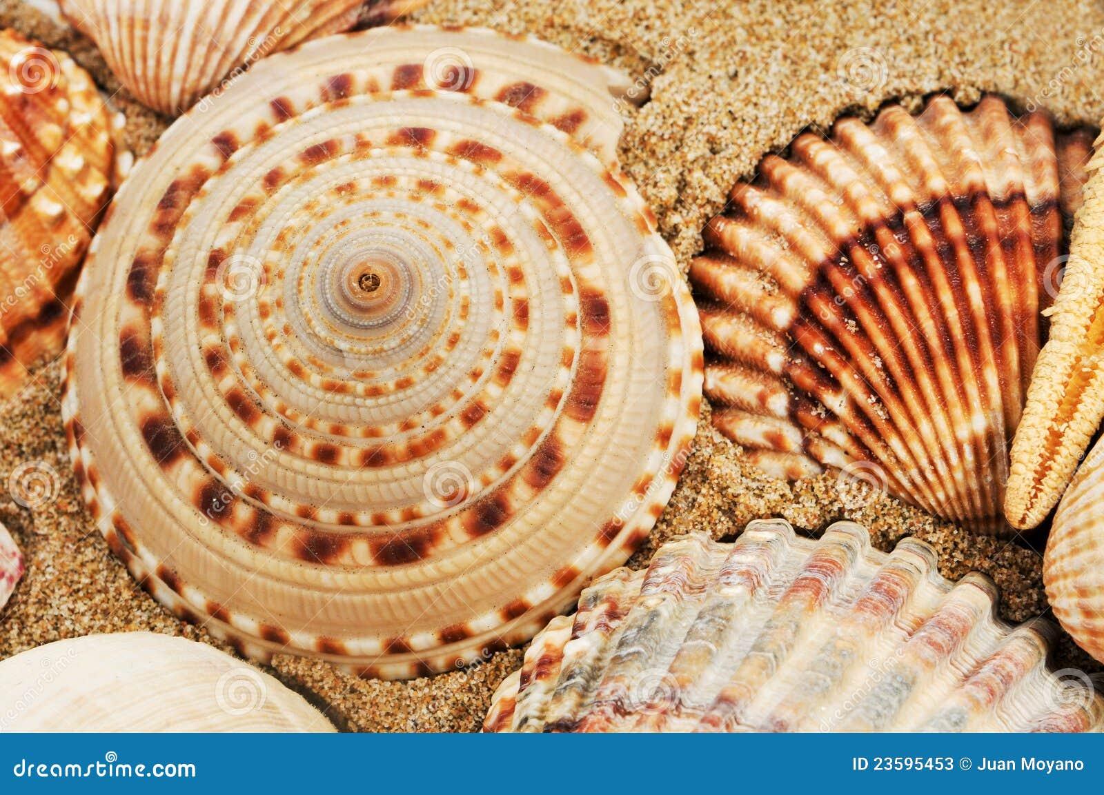Une pile des seashells