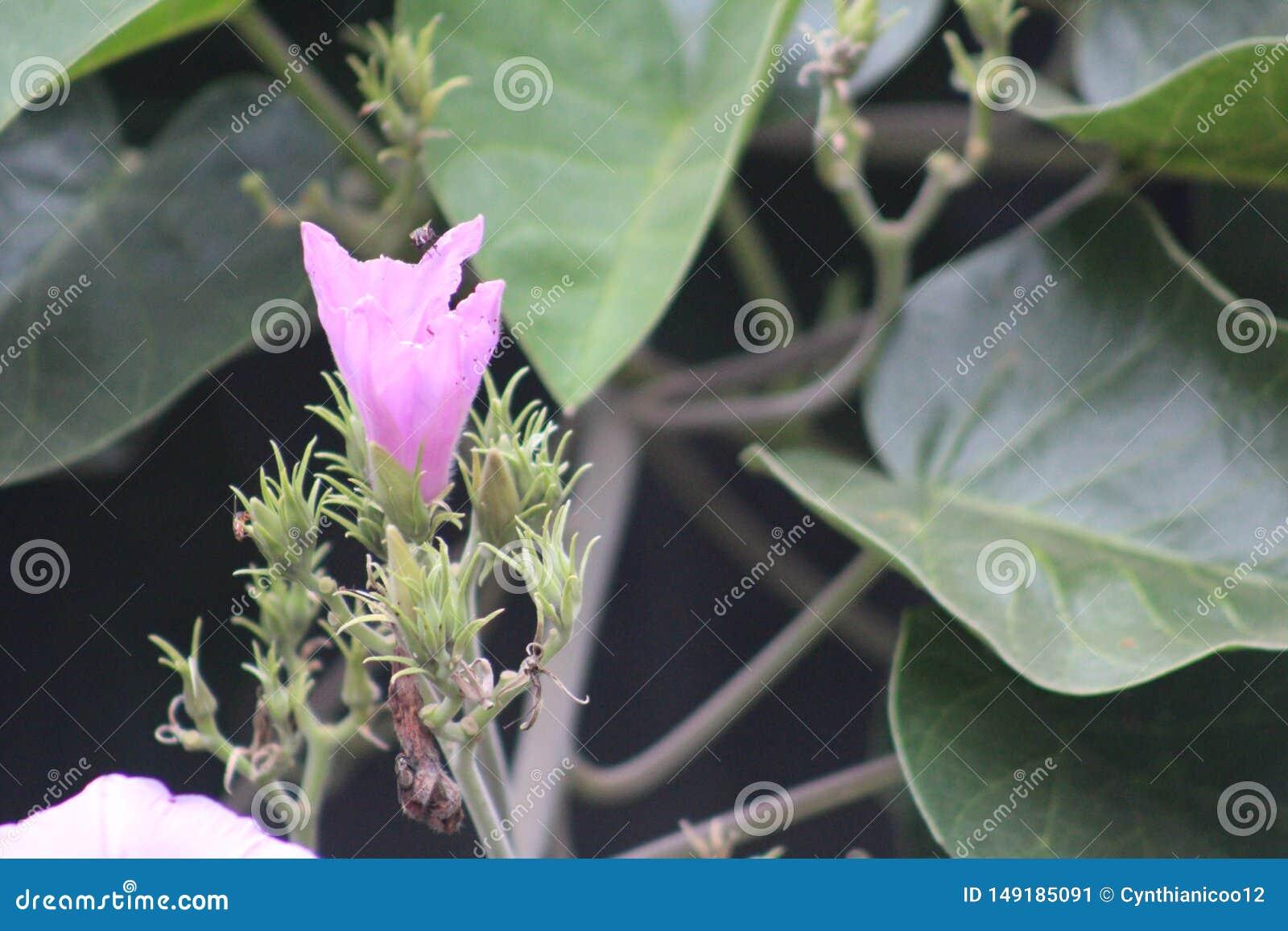 Une plante verte pendant une saison d ?t? caract?ris?e par les fleurs roses