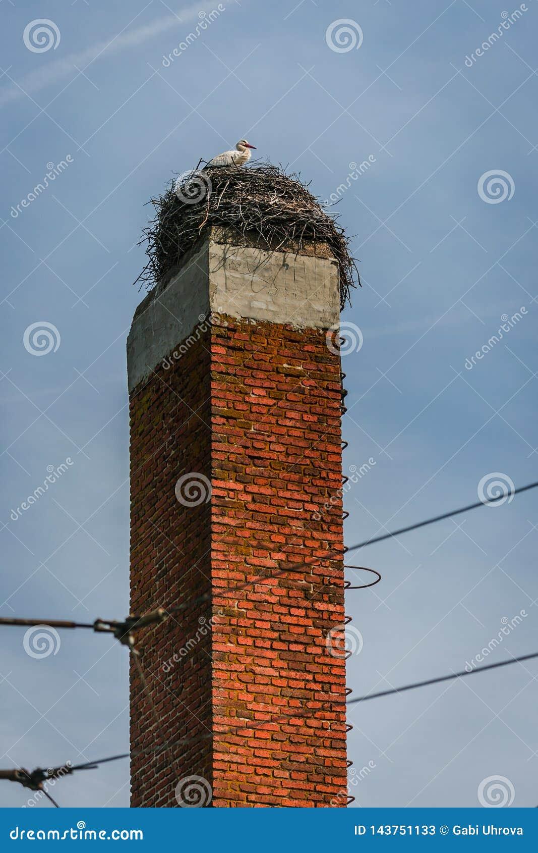 Une position de cigogne blanche sur le nid sur la cheminée rouge