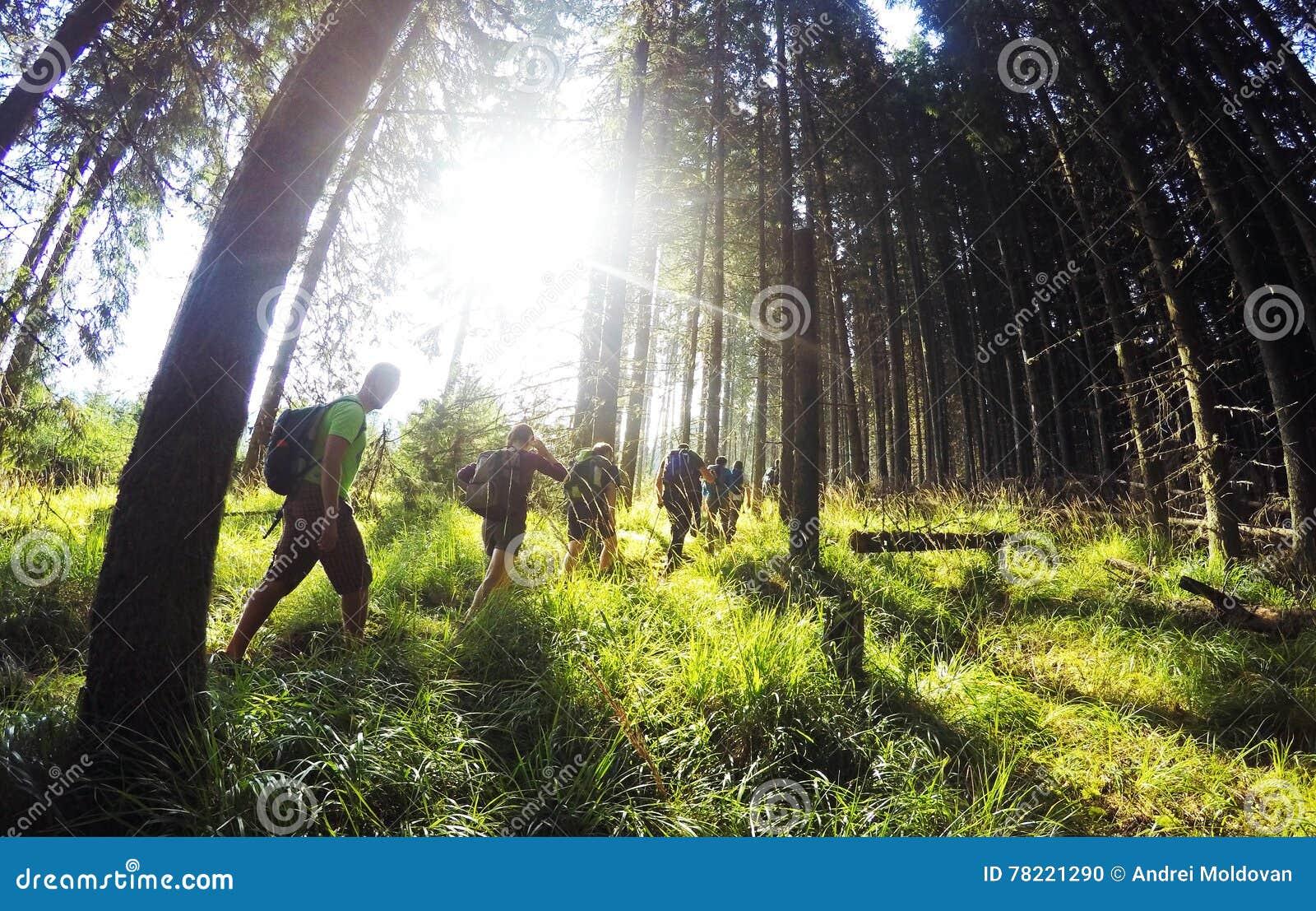 Une promenade par la forêt