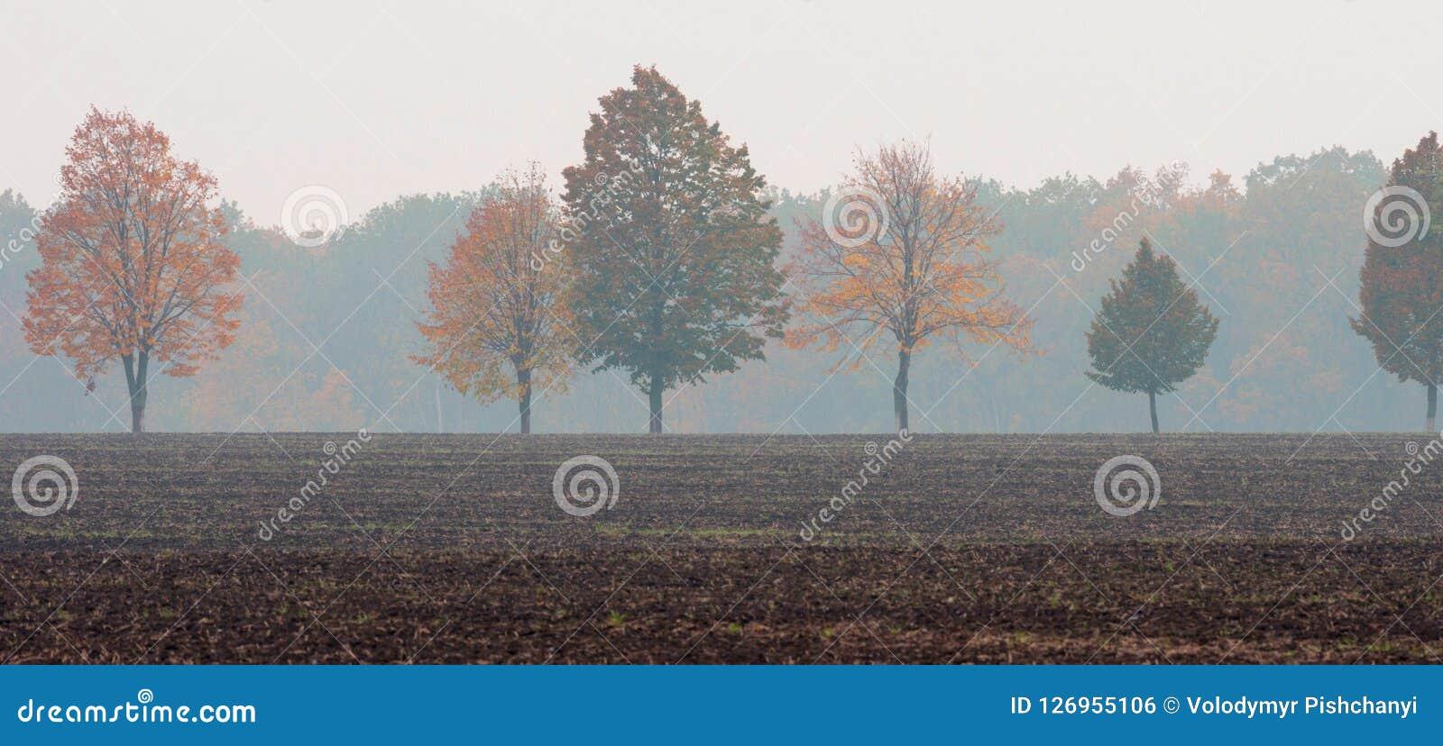 Une rangée des arbres avec jaune et le rouge part au milieu du champ dans la perspective d une forêt brumeuse