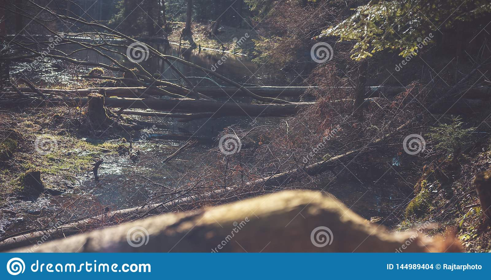 Une rivière naturelle de montagne dans la forêt, castors