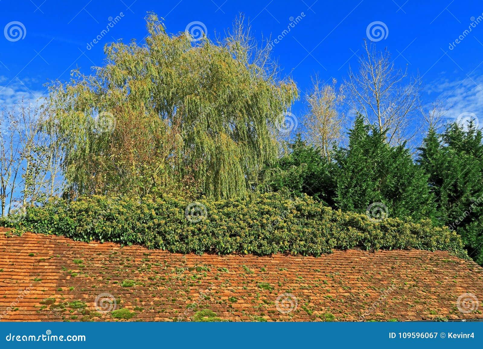 Une scène de région boisée de vieux dessus de toit carrelé et d arbres verts