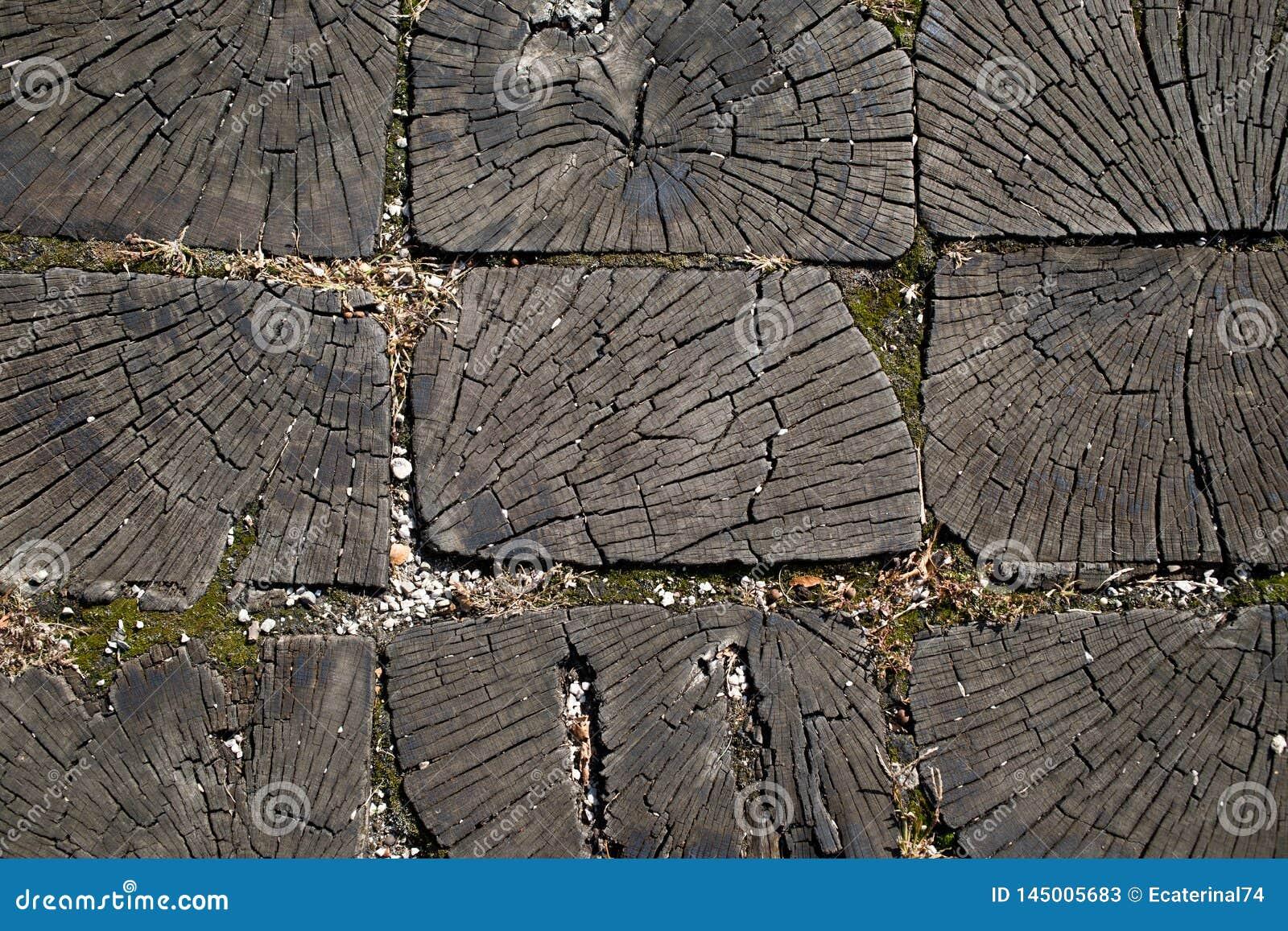 Une section transversale du tronc d un vieil arbre