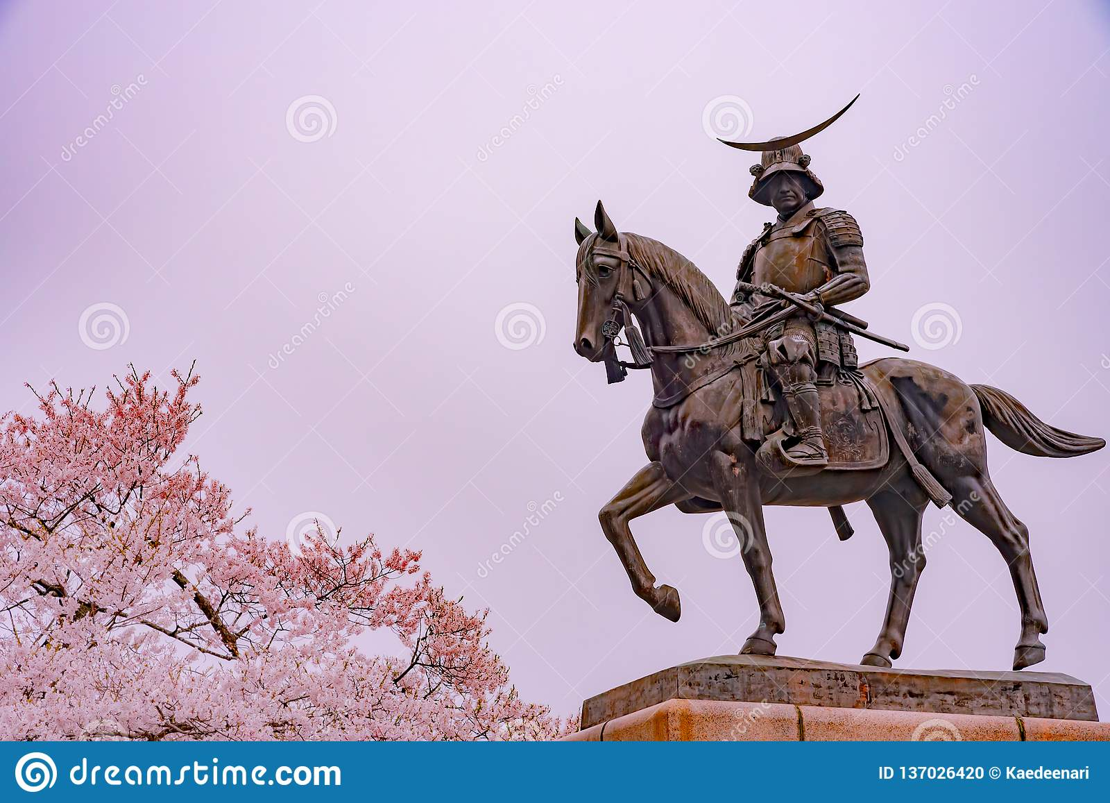 Une statue de Masamune Date présentant à cheval Sendai Castle dans des fleurs de cerisier de pleine floraison, parc d Aobayama, S