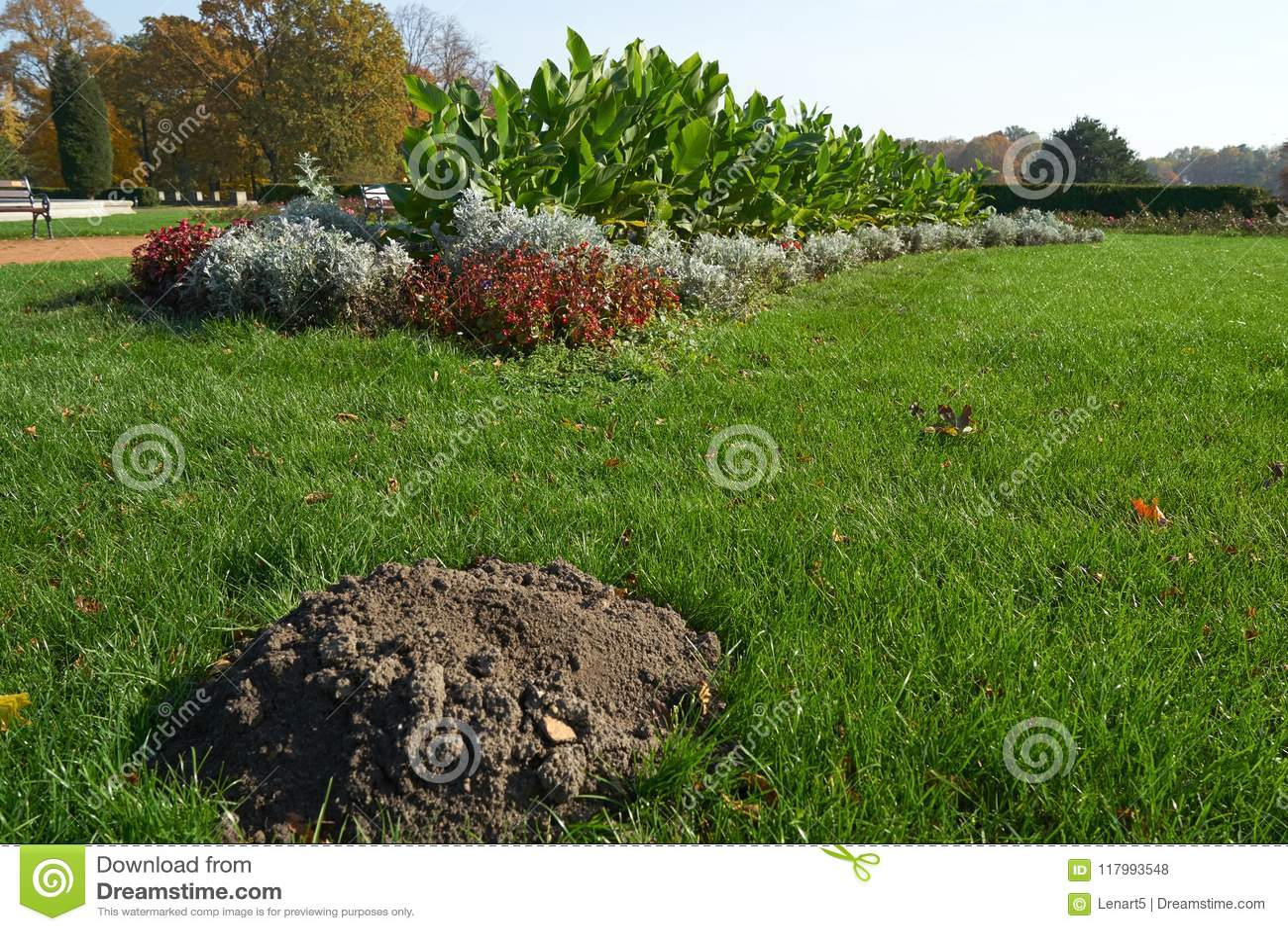 Une taupe de taupe sur une pelouse soignée de parc