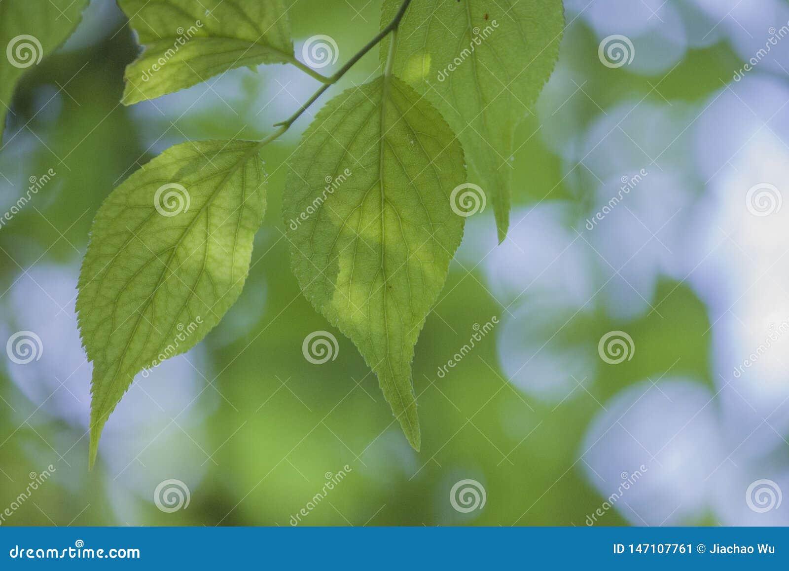 Une usine avec les feuilles vertes tendres