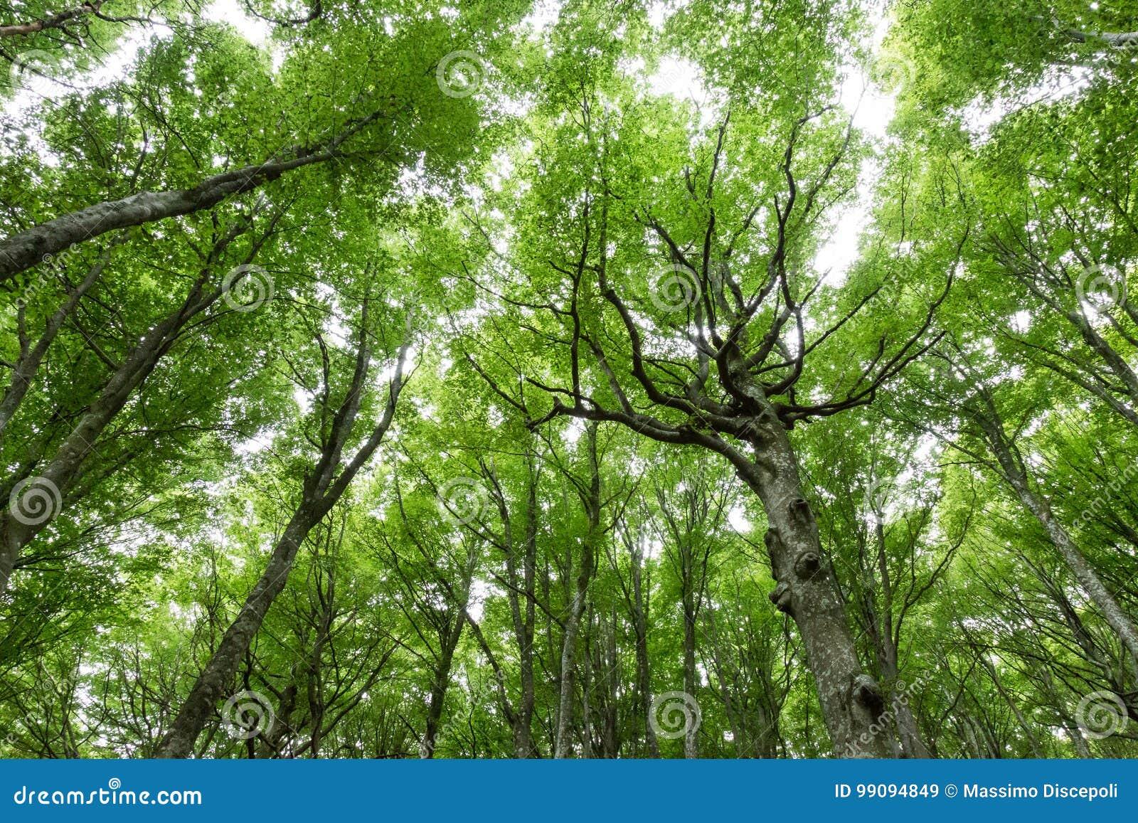Une vue d un bois avec le feuillage vert très intense et expressif