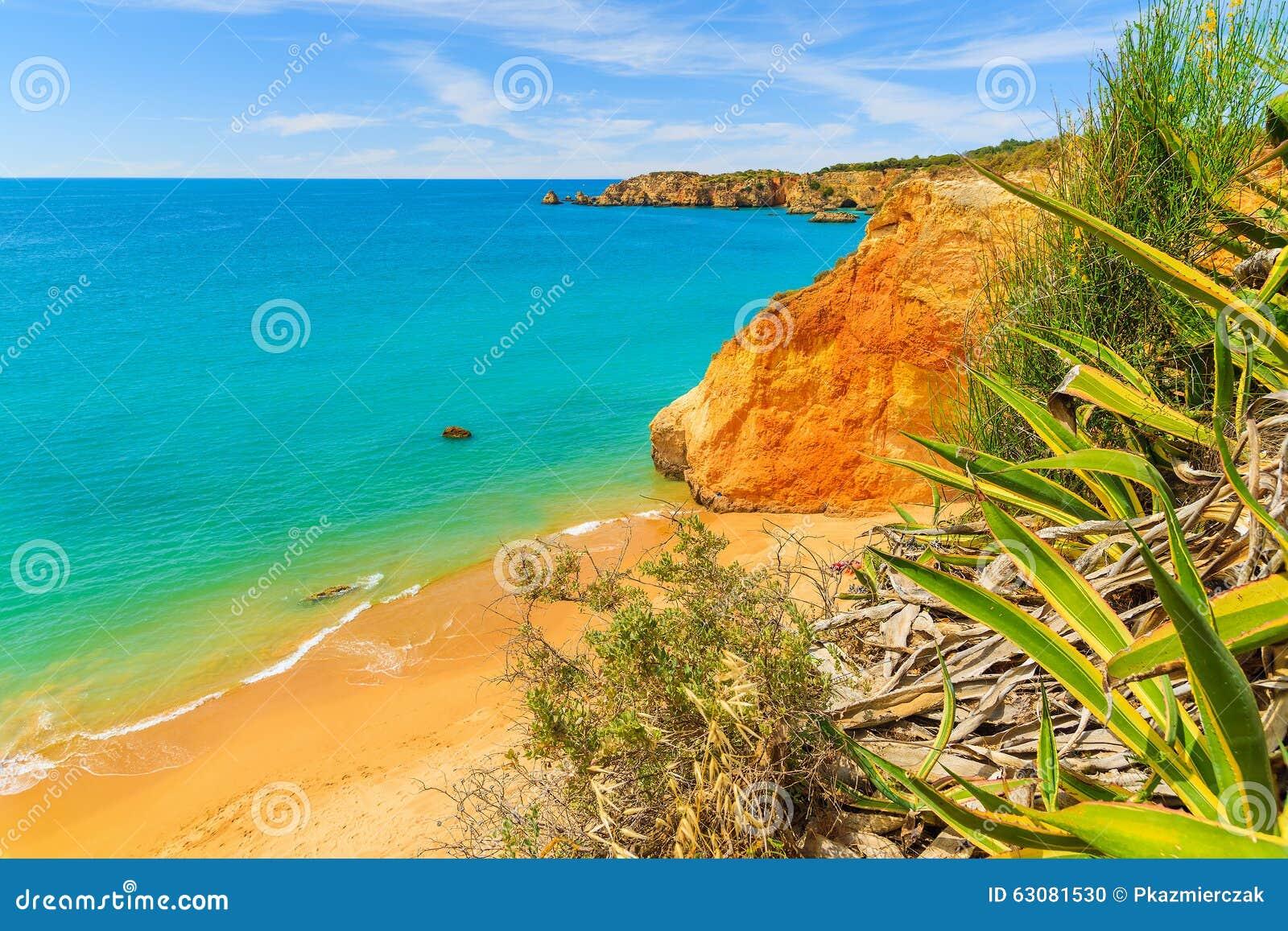 Download Une Vue D'une Plage Du DA Rocha De Praia Photo stock - Image du haut, extérieur: 63081530