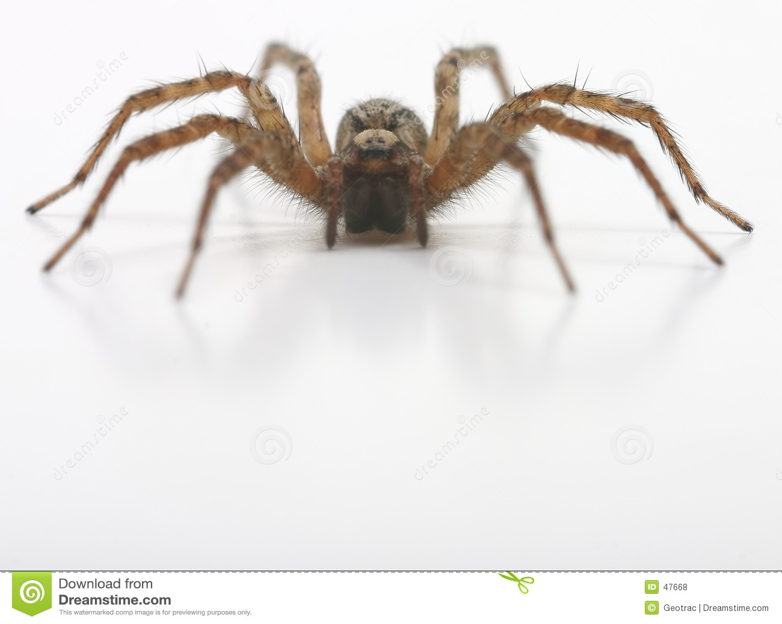 Une vue de face d araignée