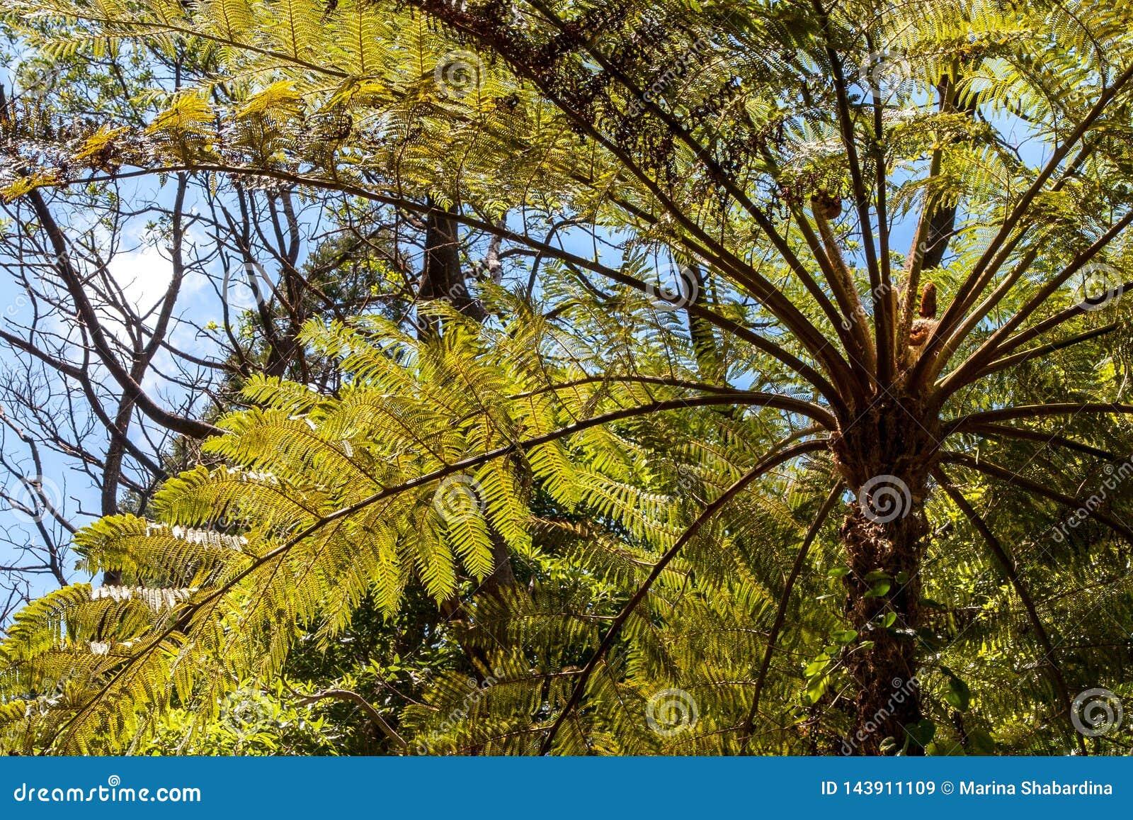 Une vue de la base des feuilles des palmiers avec la belle lumière du soleil