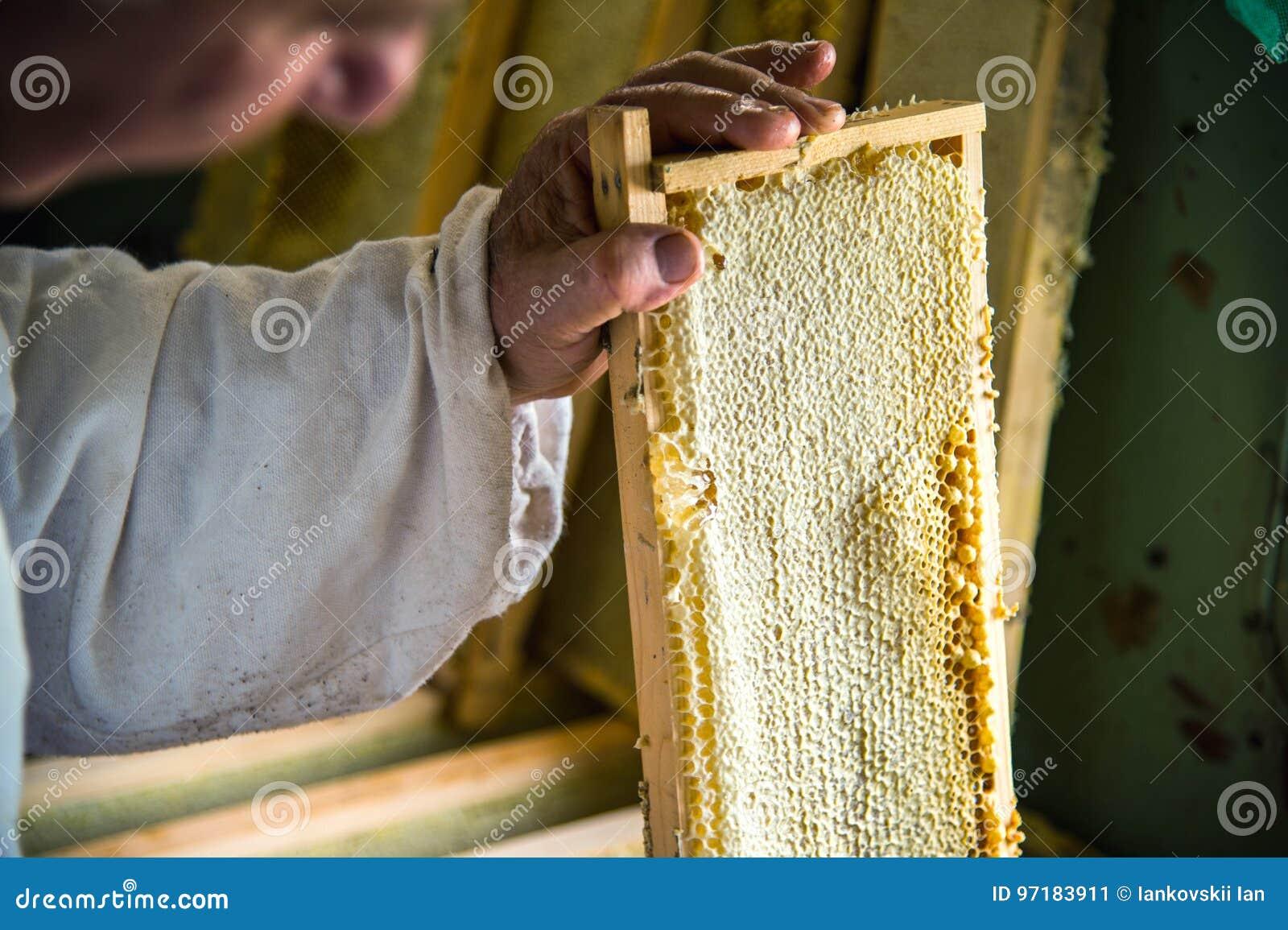 Unfertiger Frischer Honig In Den Bienenwaben, Die In Einen Rahmen Im ...