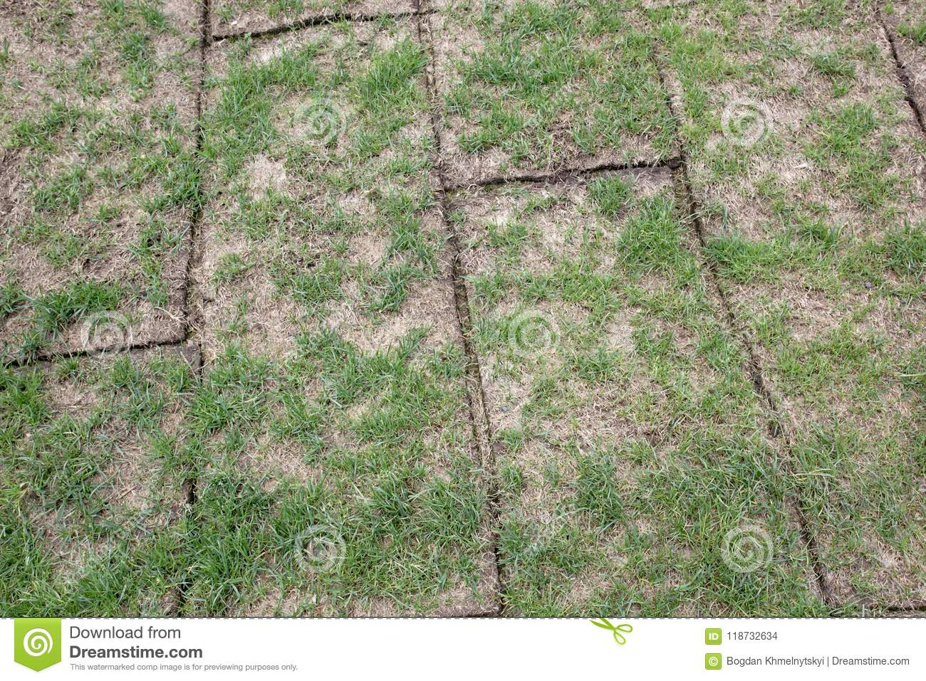 Unfolded land rolls with green grass, grass is very bad quality, sparse and small